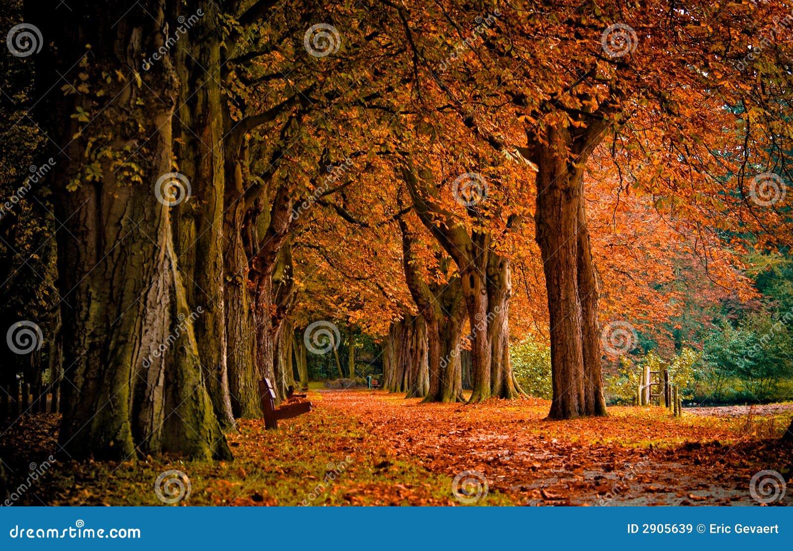 De herfst in het bos
