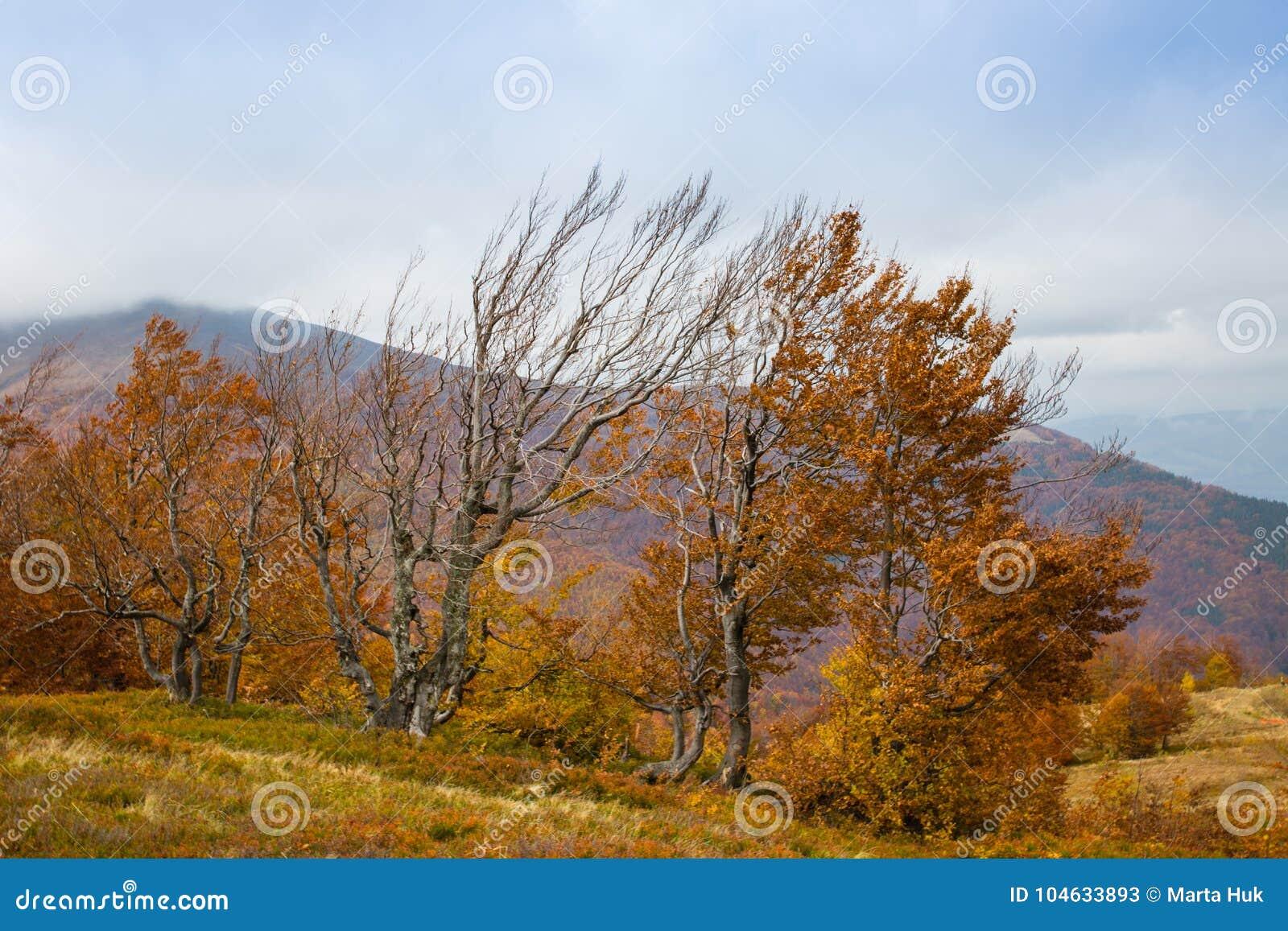Download De Herfst In Karpatische Bergen Stock Afbeelding - Afbeelding bestaande uit autumn, gras: 104633893