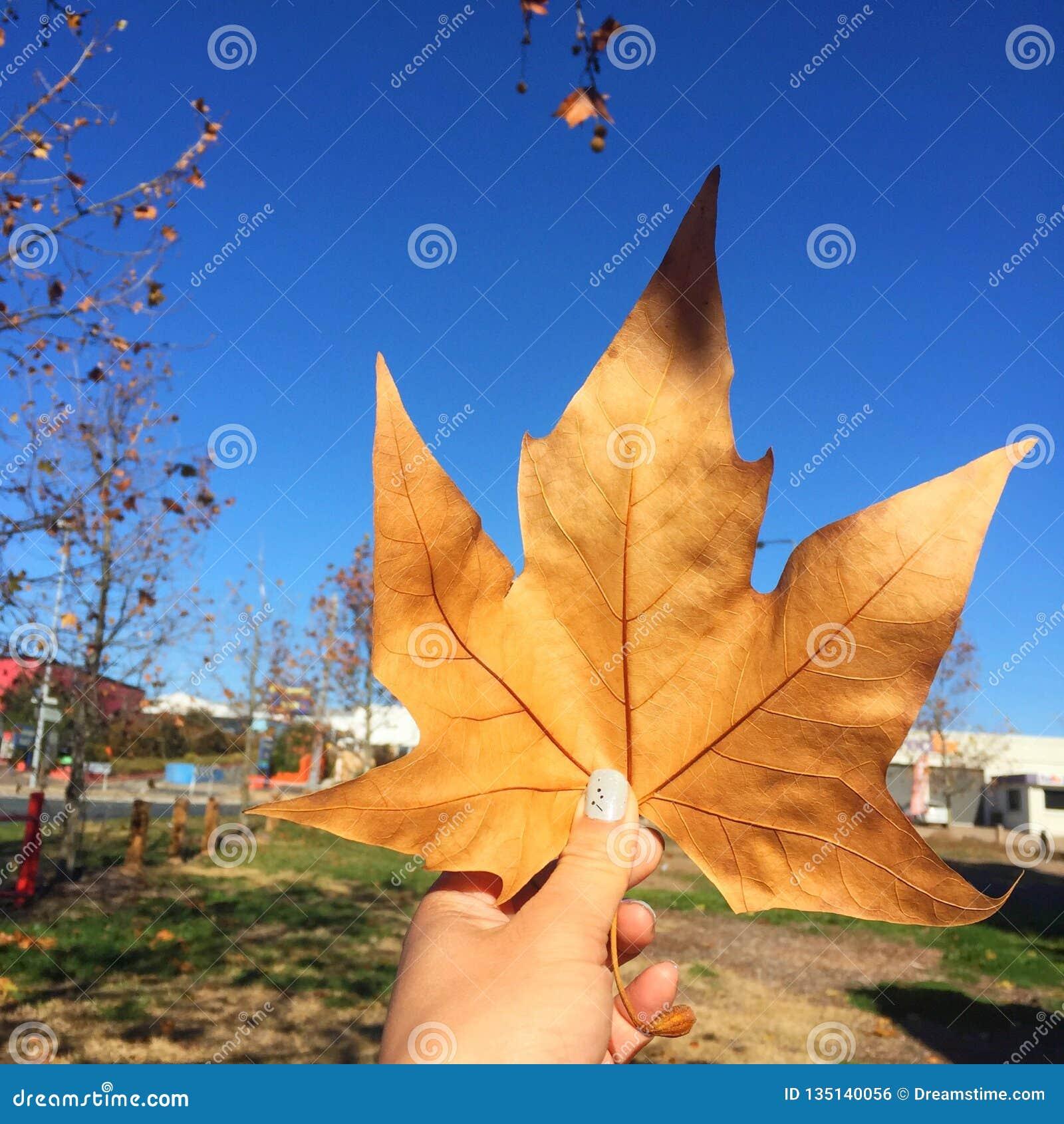 De herfst komt met één blad