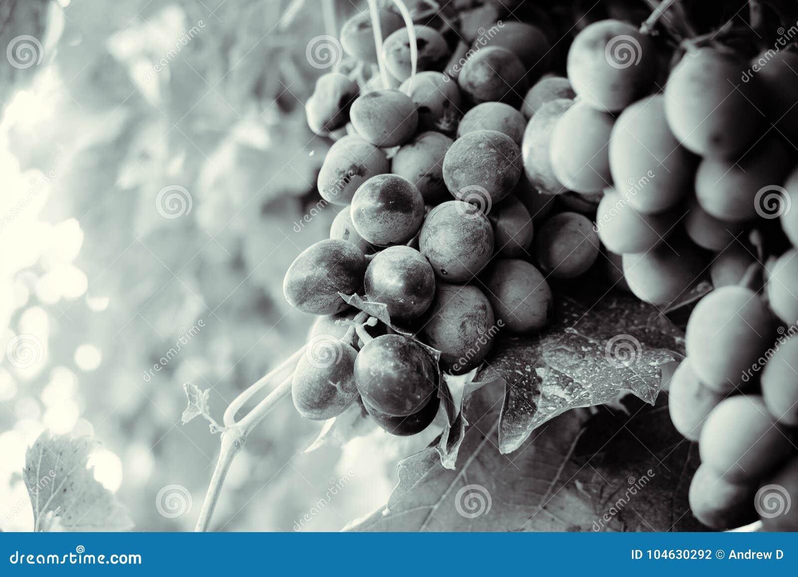 Download De Herfst in Moldavië stock foto. Afbeelding bestaande uit aroma - 104630292
