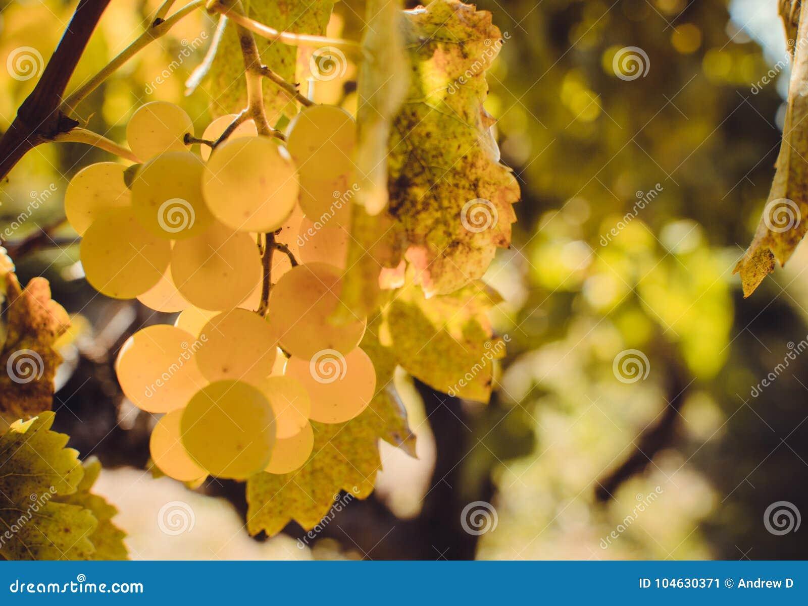 Download De Herfst in Moldavië stock afbeelding. Afbeelding bestaande uit geel - 104630371