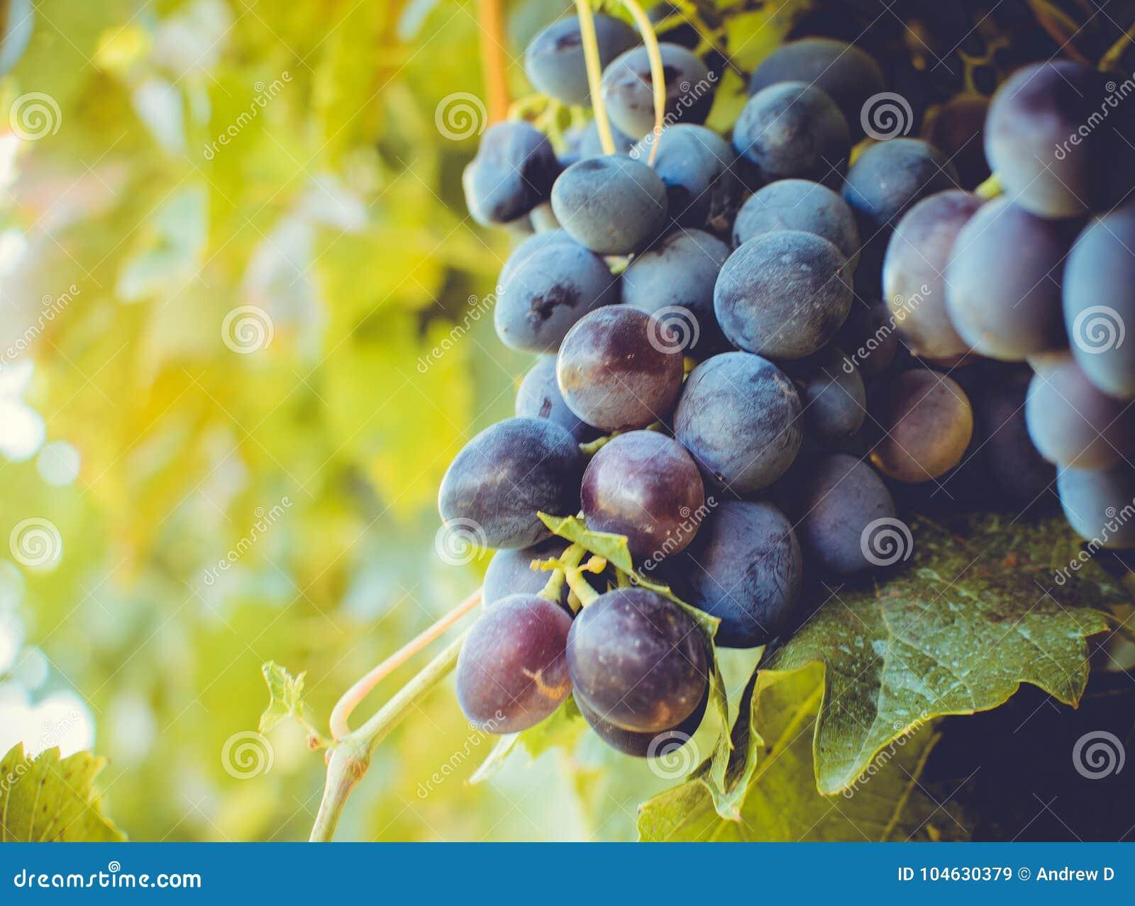 Download De Herfst in Moldavië stock afbeelding. Afbeelding bestaande uit aroma - 104630379