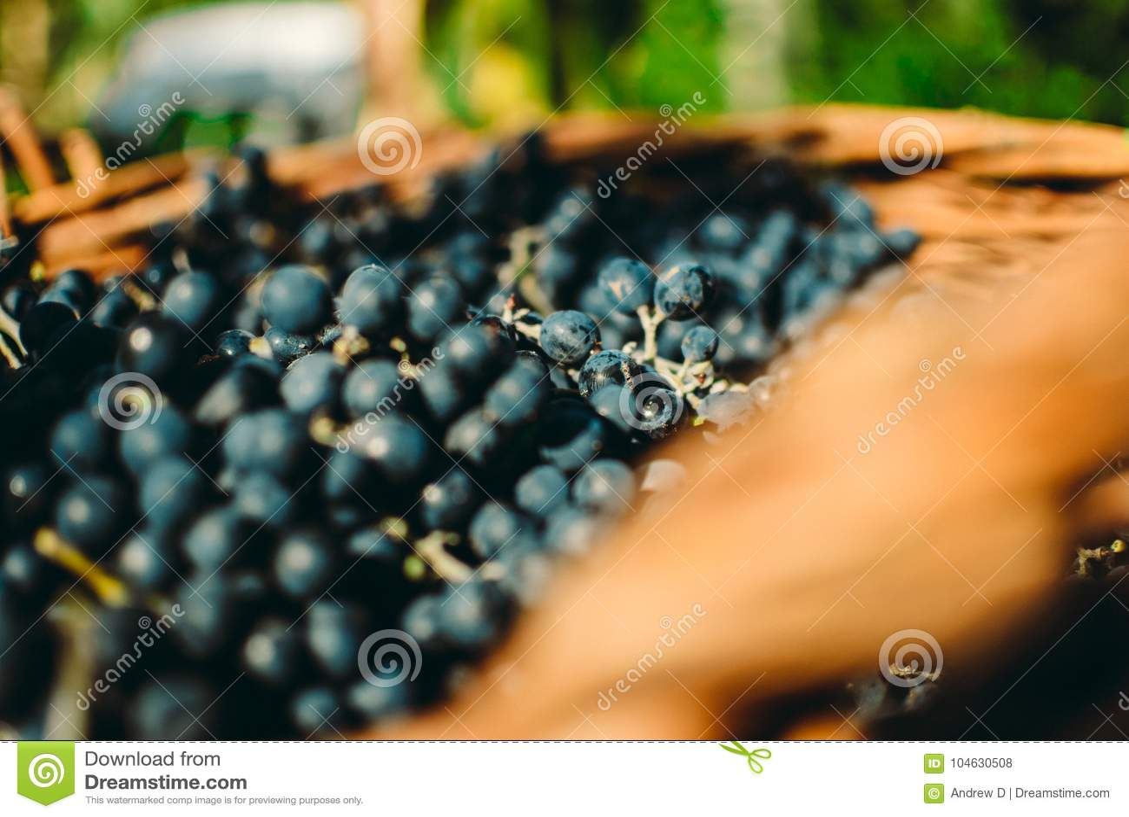 Download De Herfst in Moldavië stock foto. Afbeelding bestaande uit moldova - 104630508