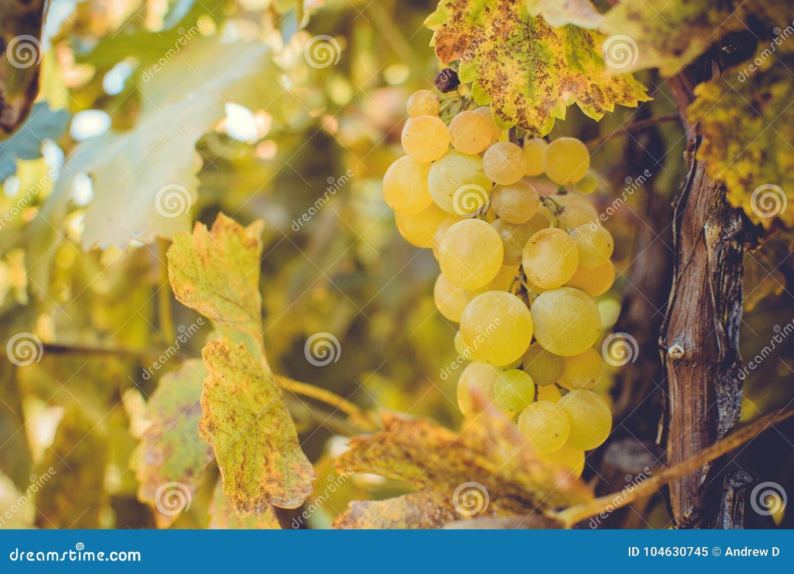 Download De Herfst in Moldavië stock afbeelding. Afbeelding bestaande uit enjoy - 104630745