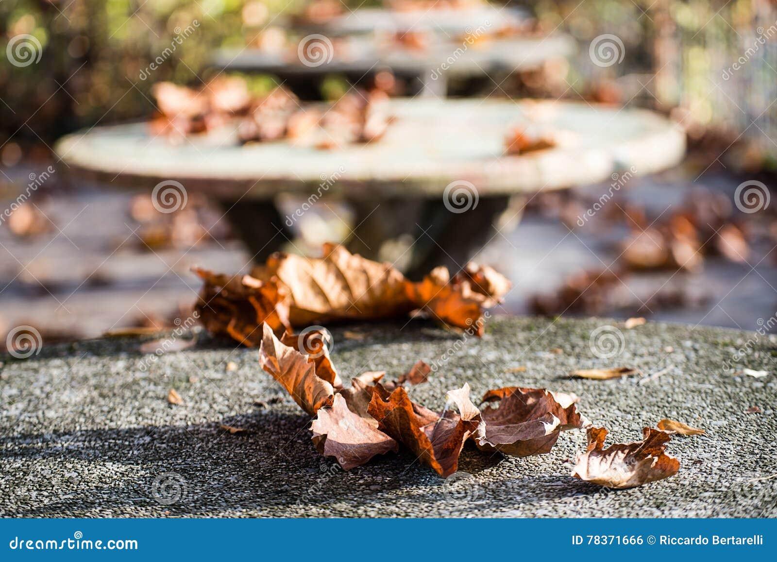 De herfst op een steenlijst