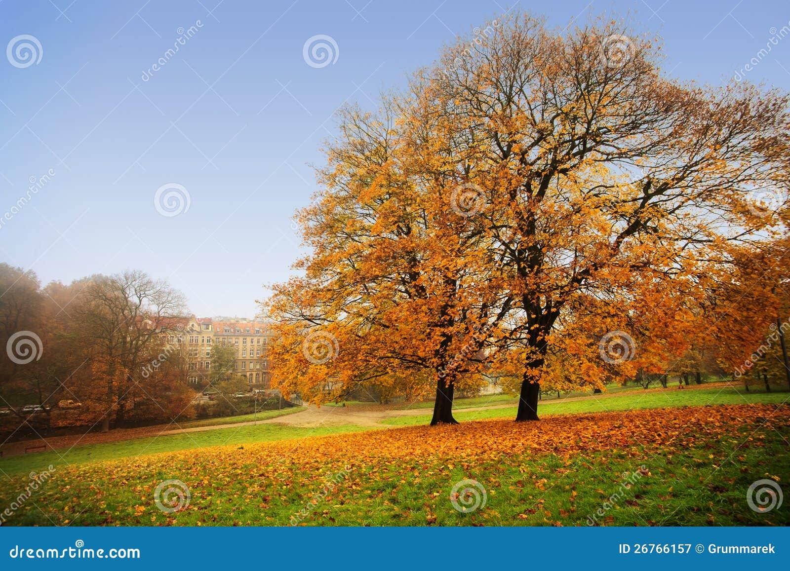 De herfst in Park