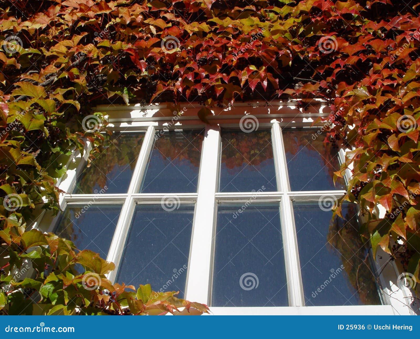 De herfst venster