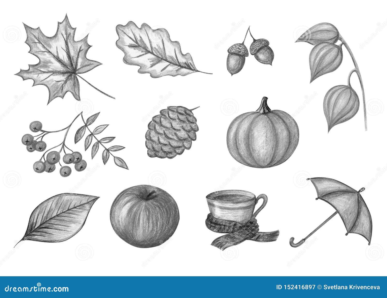 De herfst zwart-wit reeks