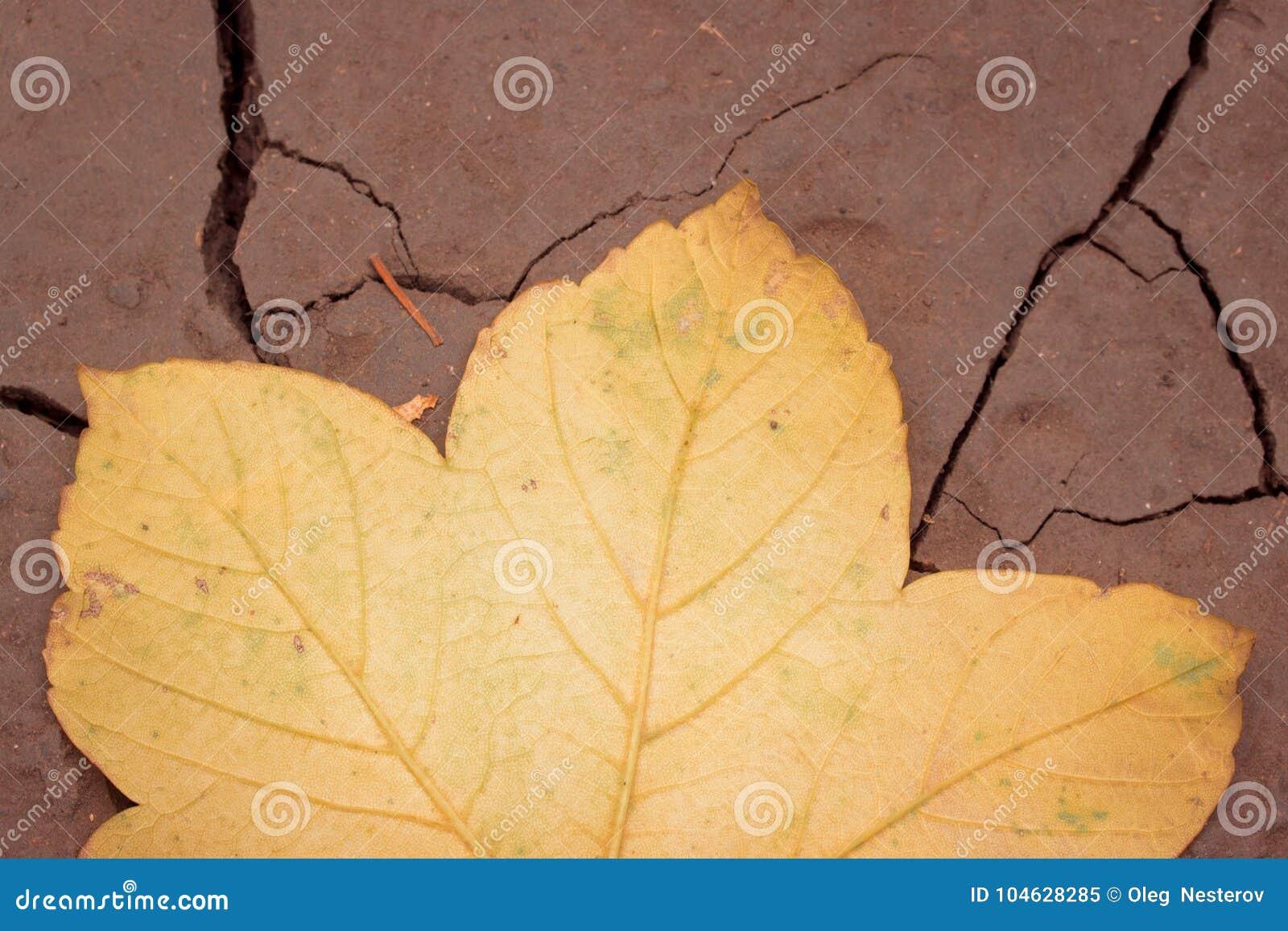 Download De De Herfstachtergrond Een Blad Gevallen Van Een Esdoorn Ligt Op De Grond Stock Afbeelding - Afbeelding bestaande uit nave, helder: 104628285