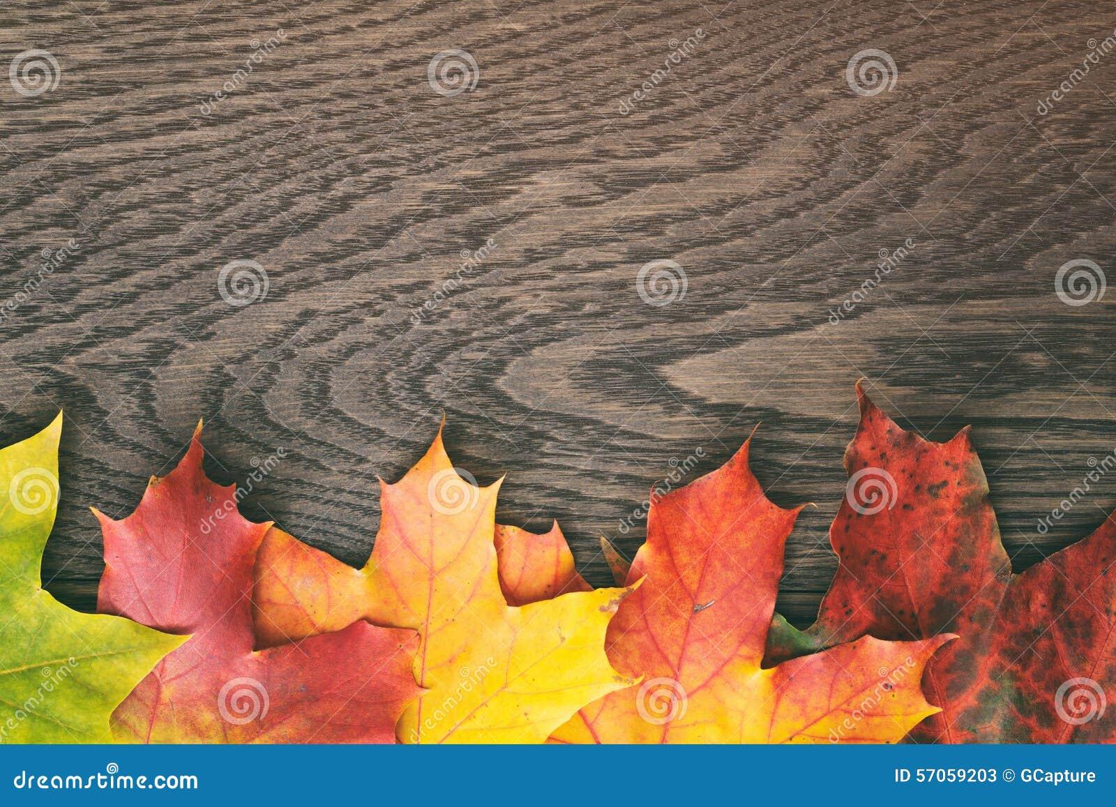 De herfstbladeren direct van hierboven