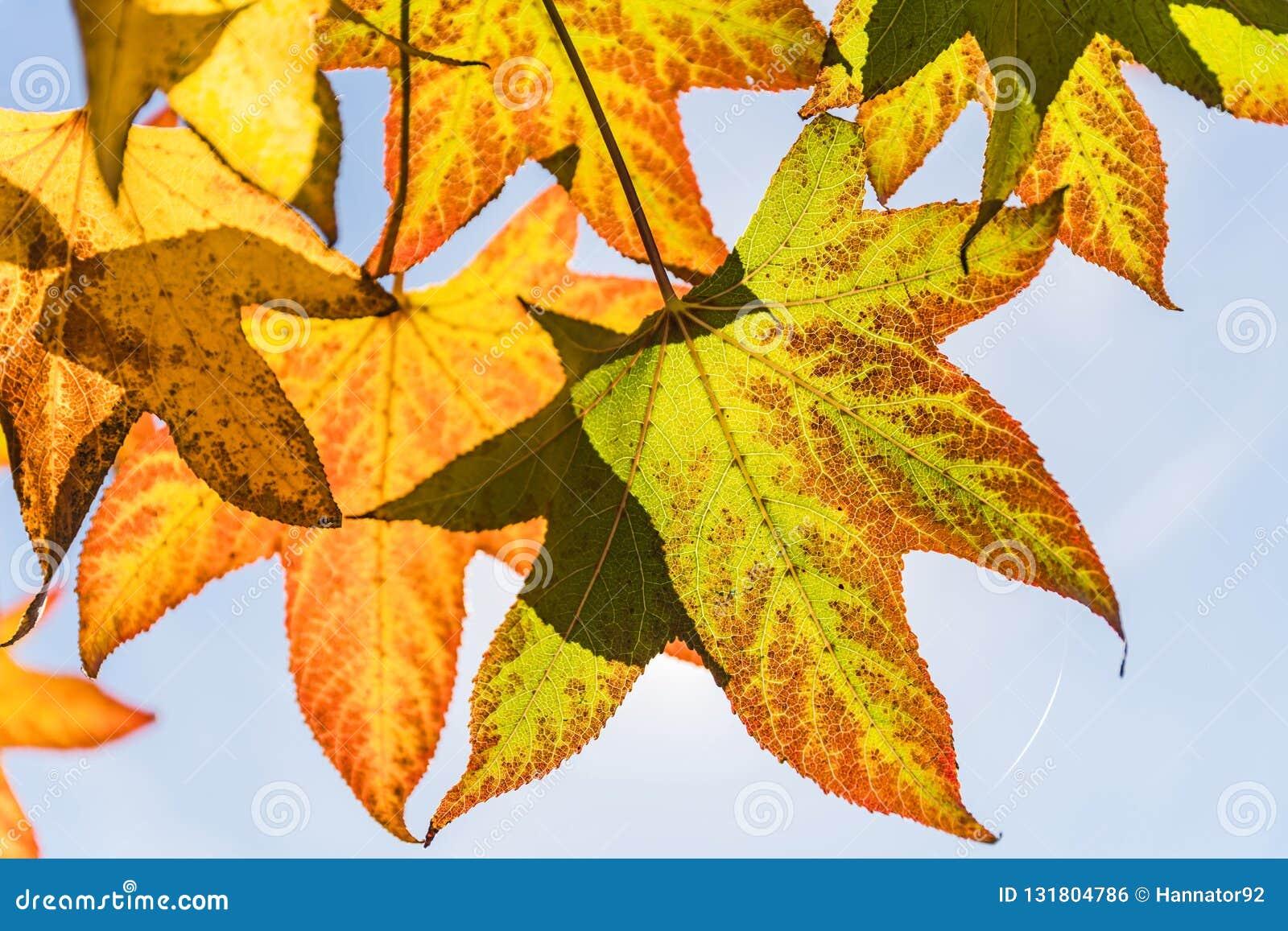 De herfstbladeren en mooie blauwe hemel