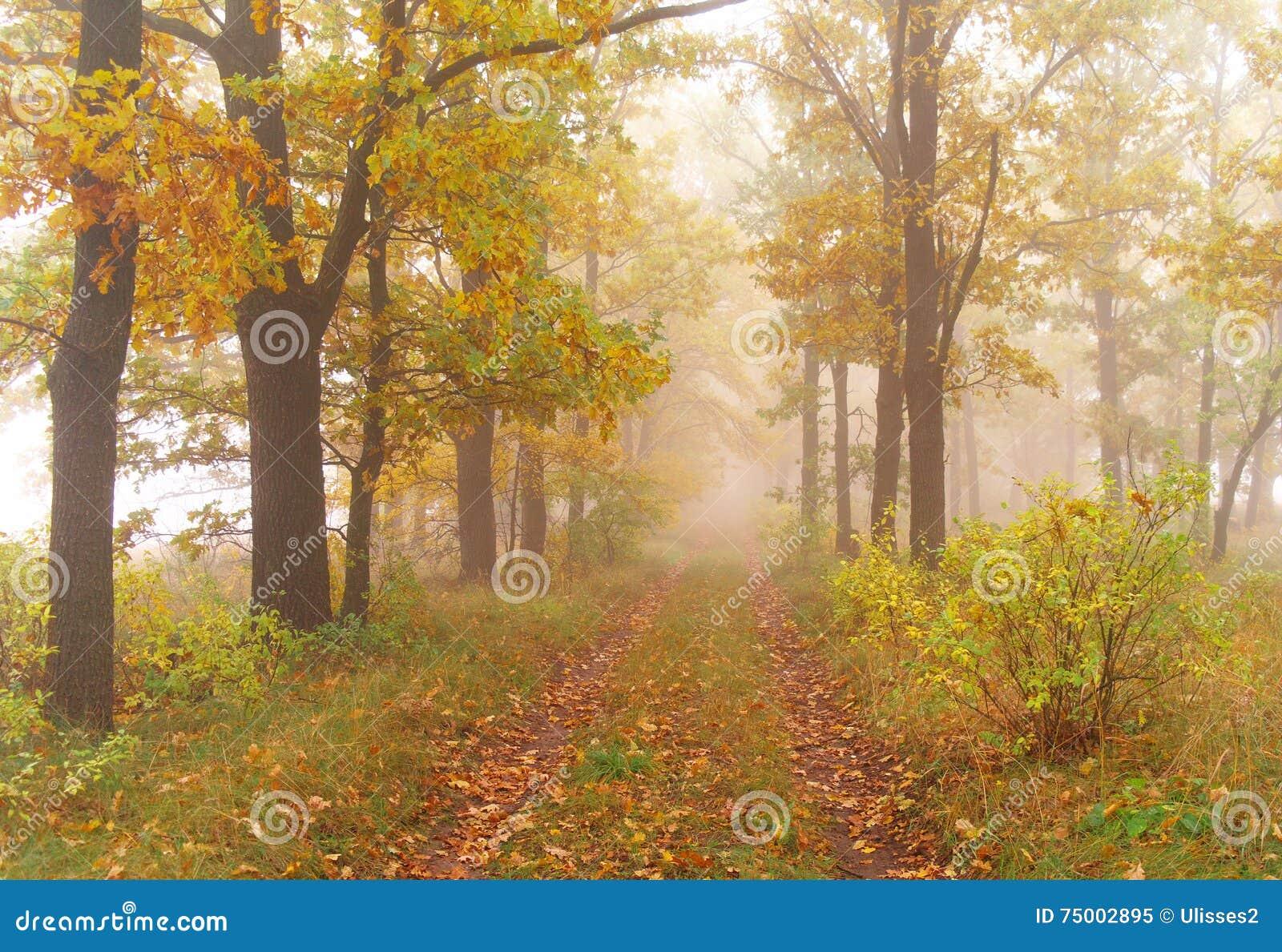 De herfstbos met nevelige ochtend