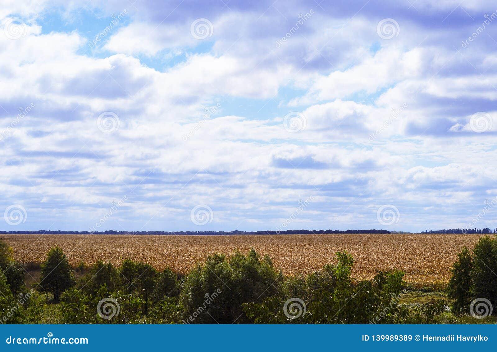 De herfstcornfield aanplanting en grote wolken in de hemel
