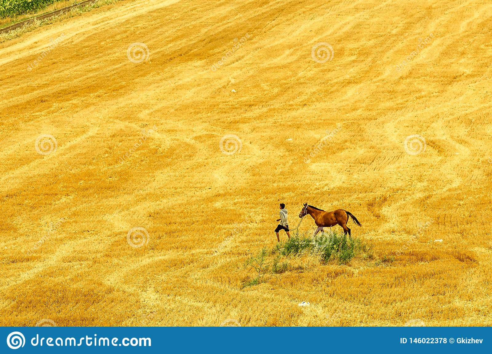 De herfstgebied met paarden en elektrische draden