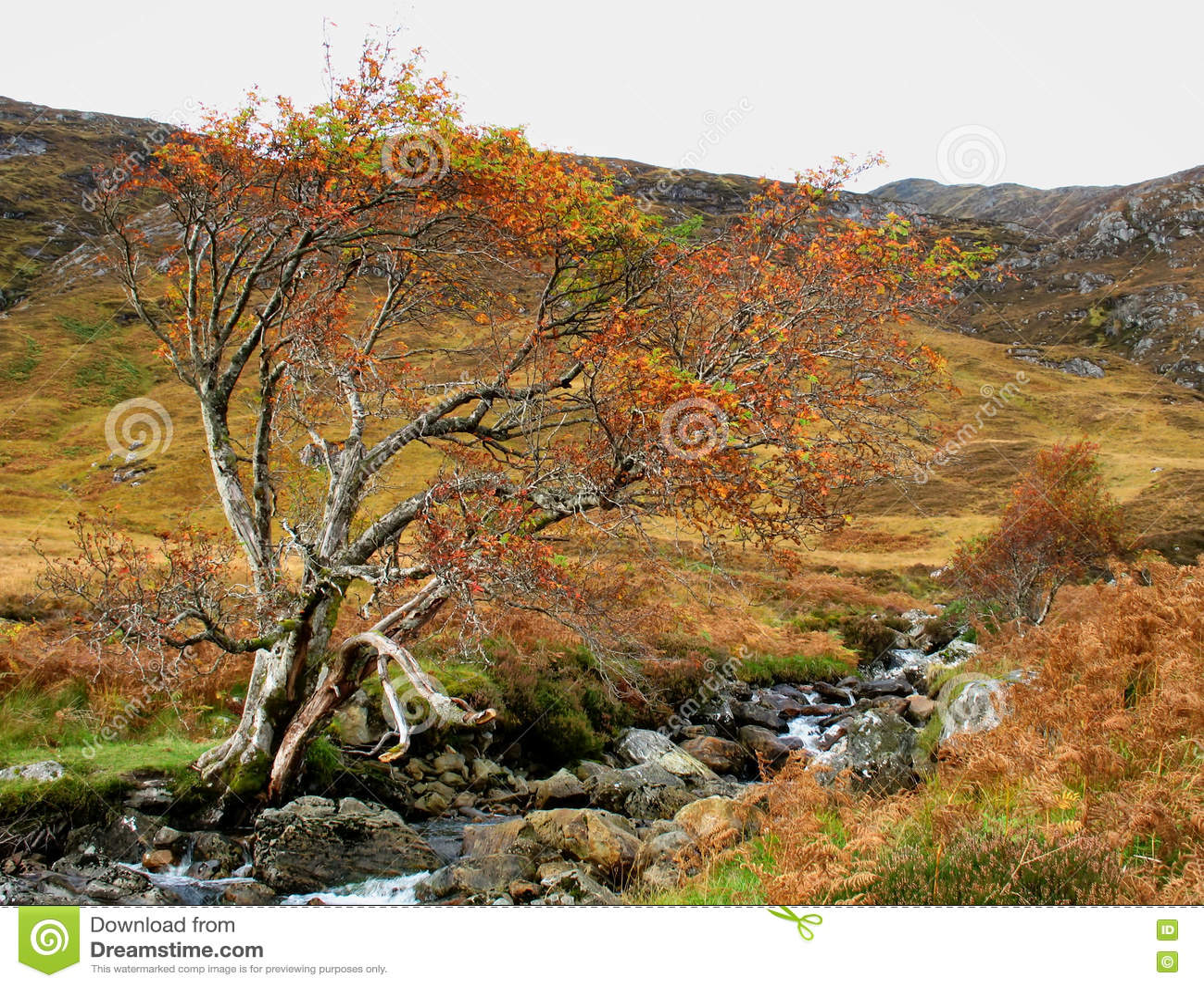 De herfstkleuren in Glen Affric