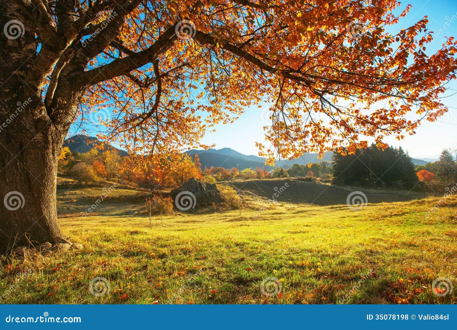 De herfstlandschap