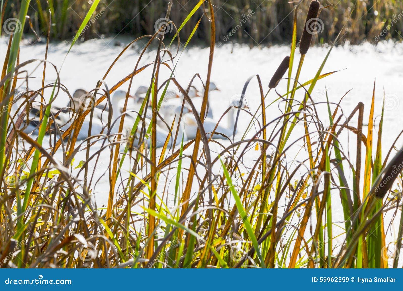 De herfstlandschap dichtbij rivier