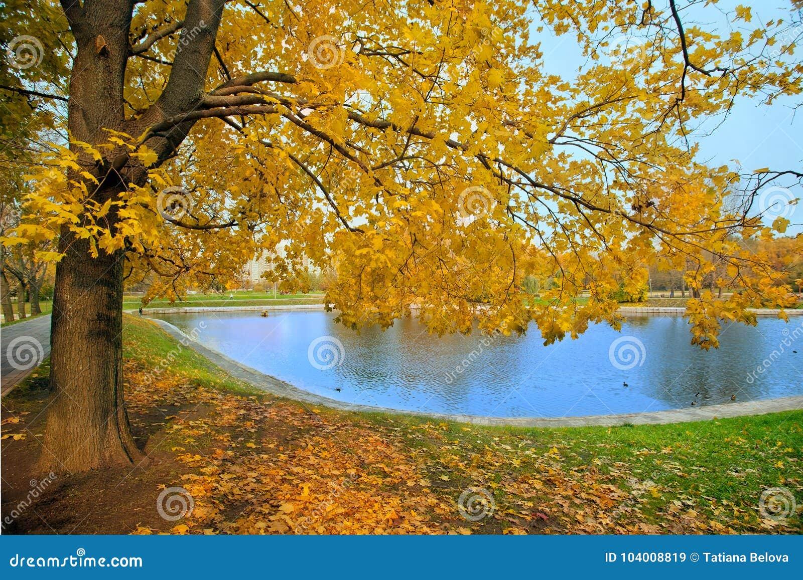 De herfstlandschap van stadspark met gouden boom en vijver
