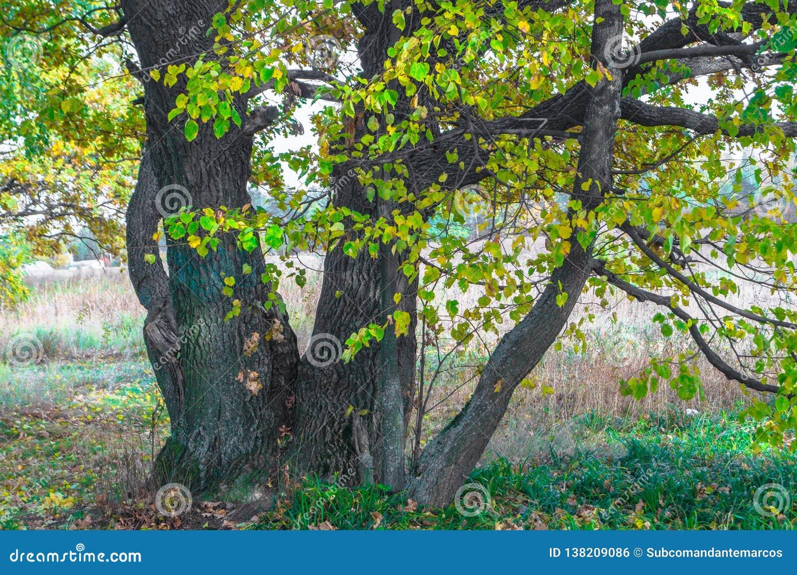 De herfstmening van een mooi eiken bosje met een mengsel van esp en berklindebomen De Indische zomer