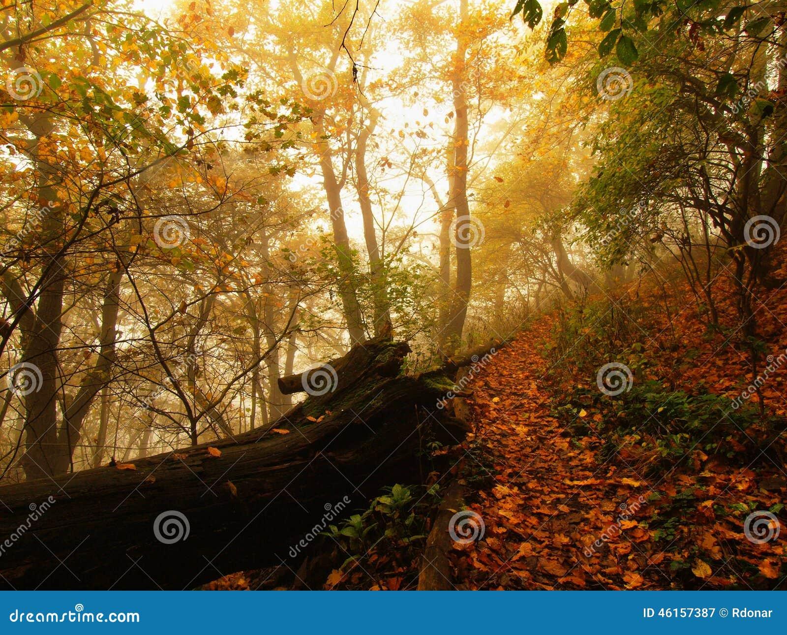 De herfstmist in beuk van verlof de bosbended en esdoornsbomen met minder bladeren onder mist Regenachtige dag
