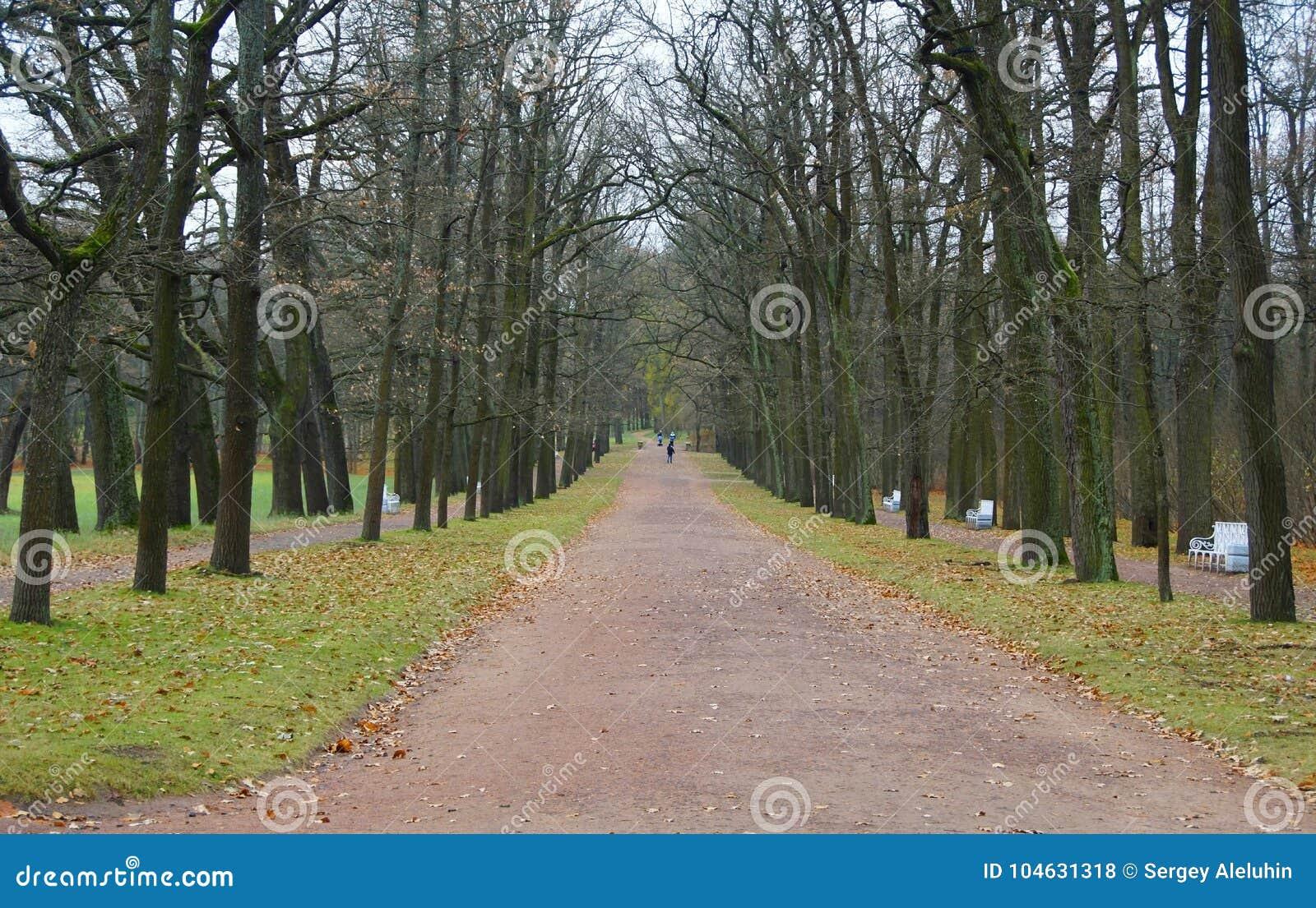 Download De Herfstochtend In Catherine Park Stock Foto - Afbeelding bestaande uit gras, kanaal: 104631318