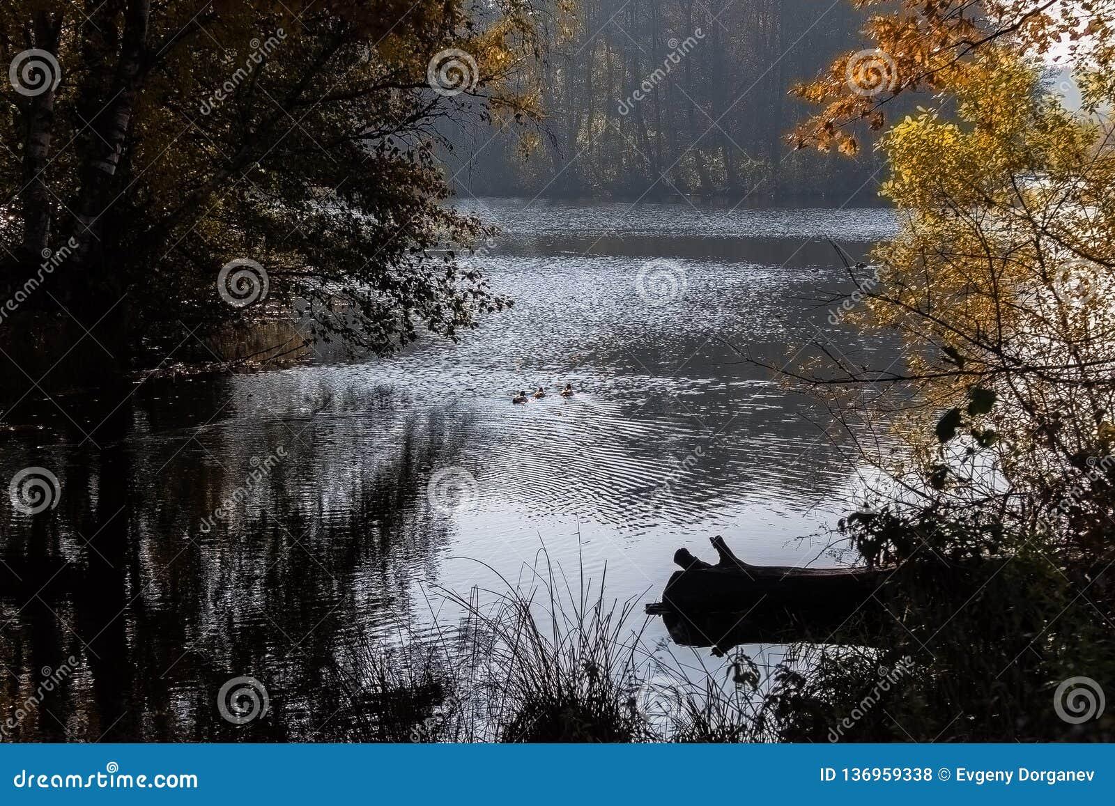 De herfstvijver wildlife