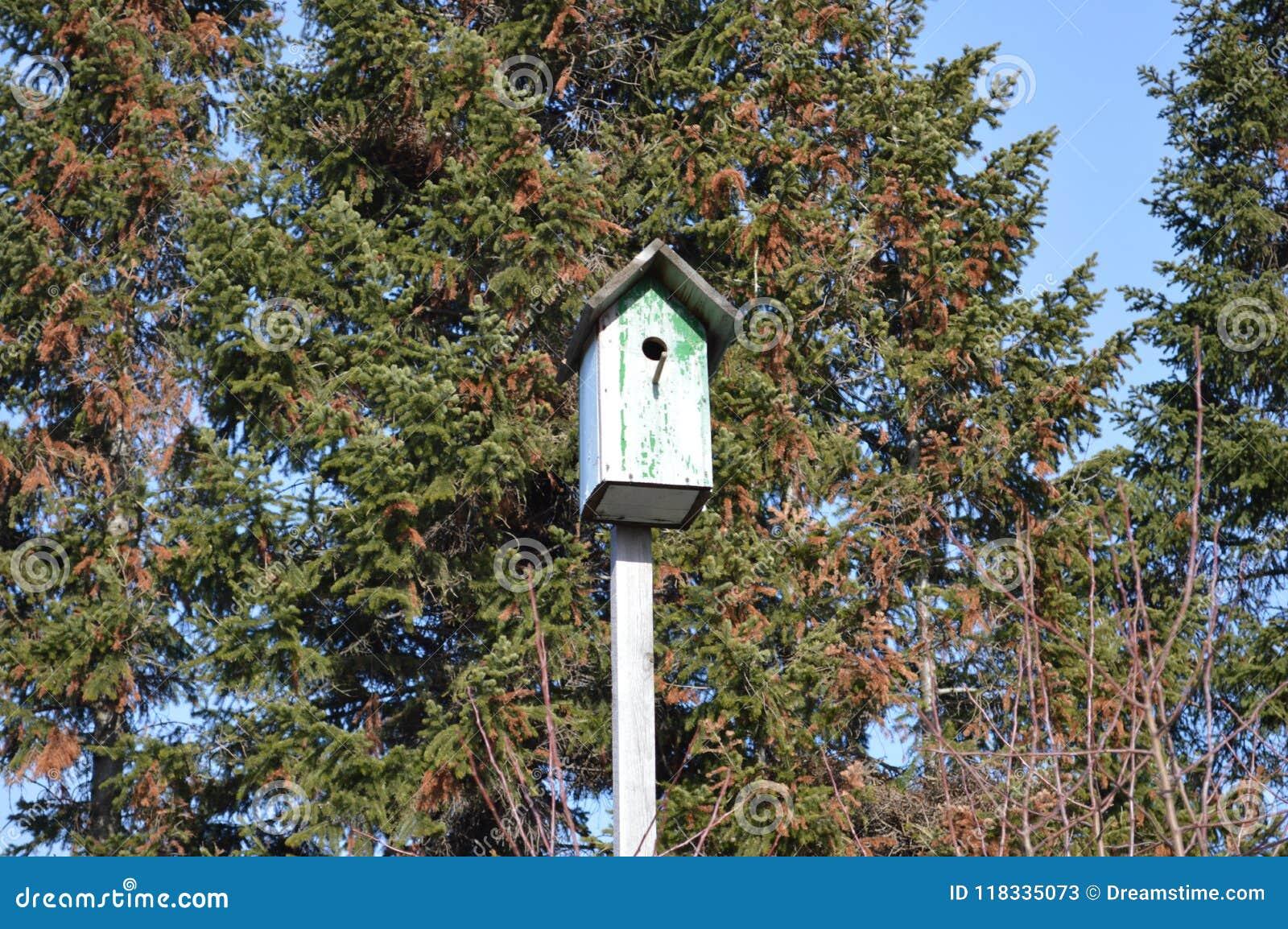 De het huis het oude houten lente van de vogelhuisvogel starling