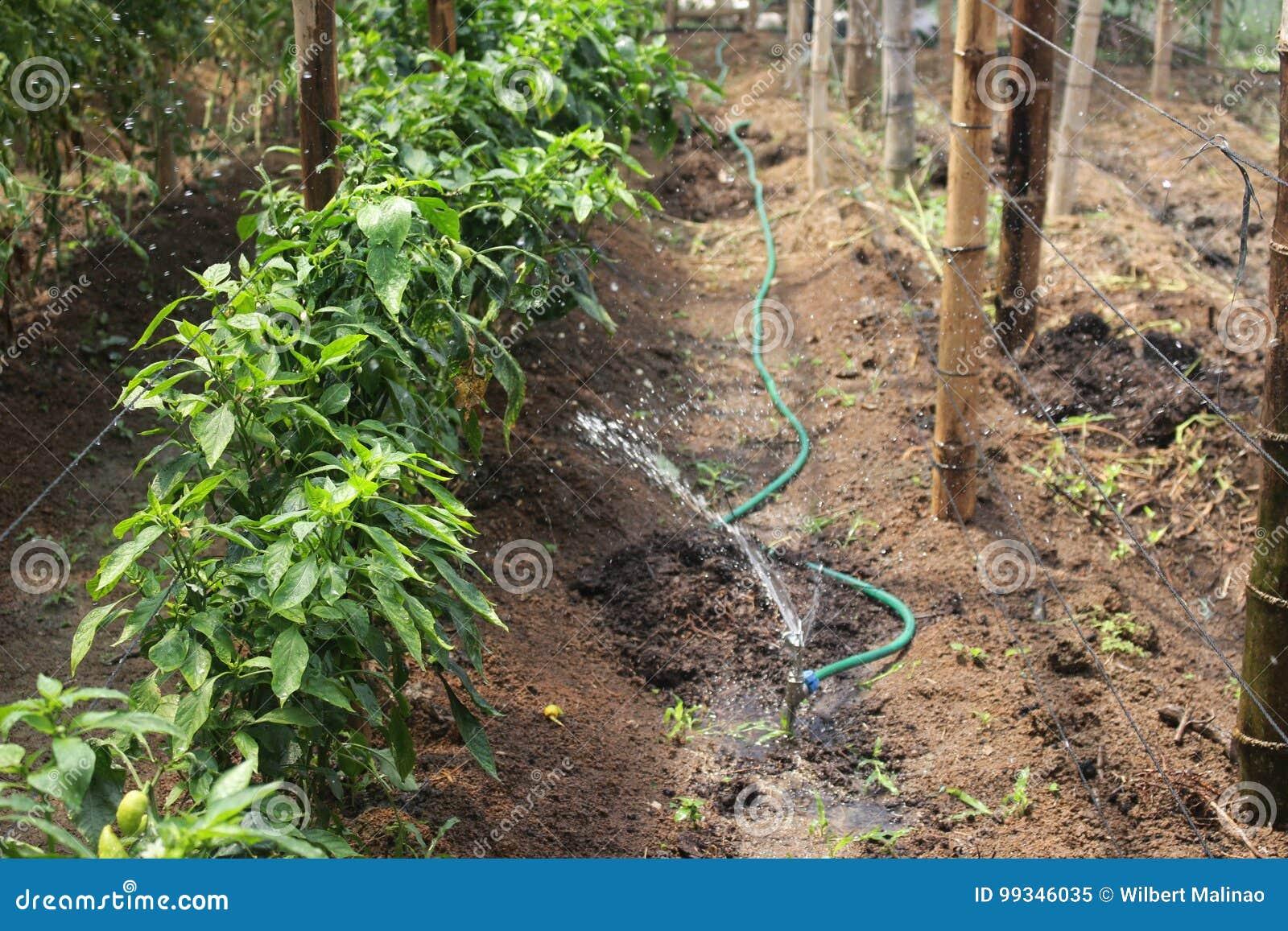 De het water geven technologie die in het hoogland wordt ontwikkeld tuiniert