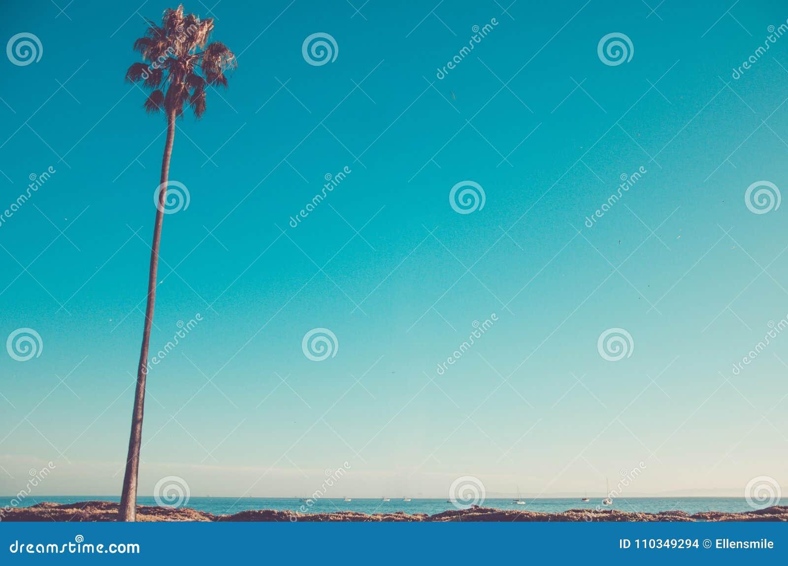 De hoge palmen van Californië op het strand, blauwe hemelachtergrond