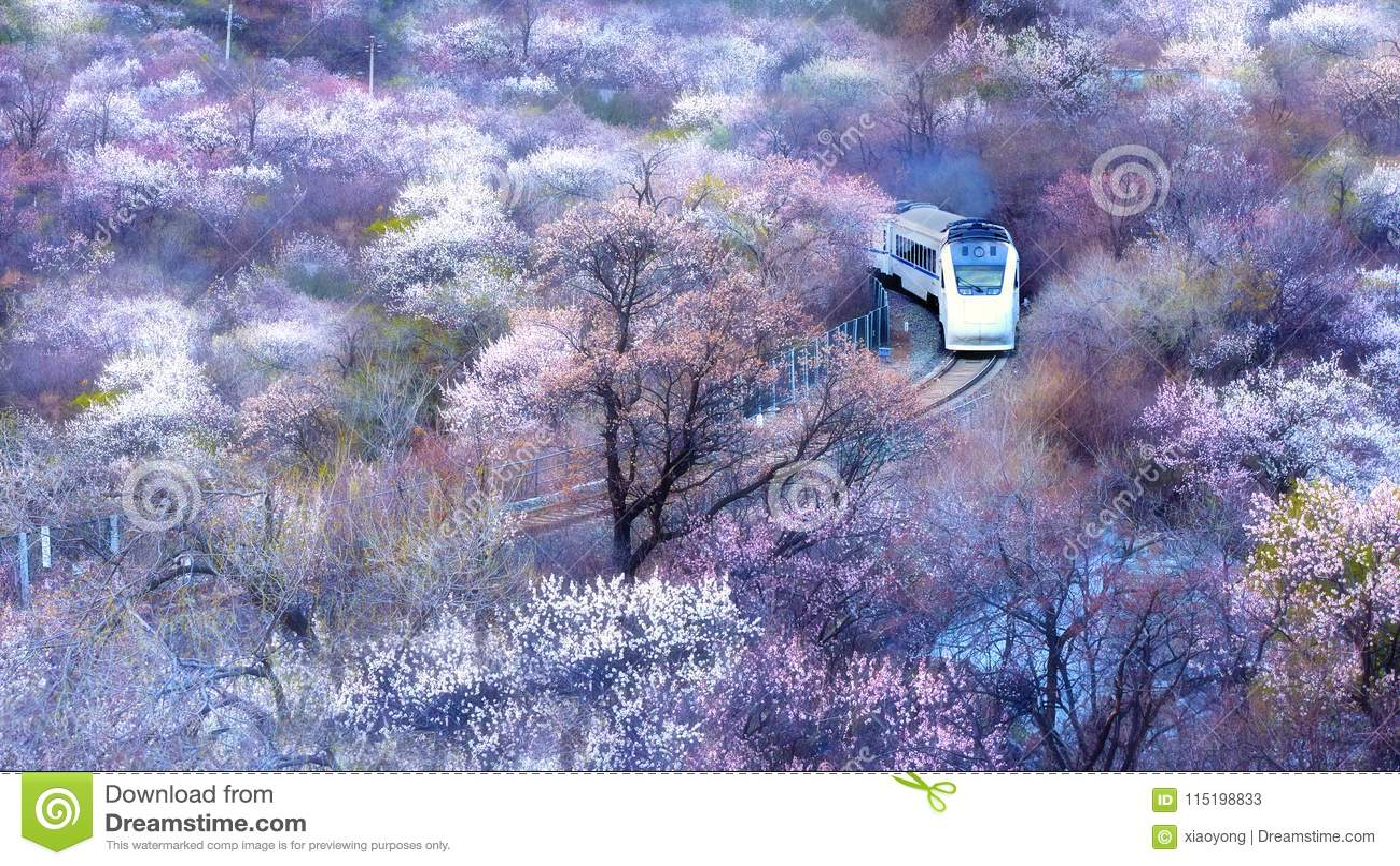 De hoge snelheidstrein van China het doornemen oceaan van bloemen