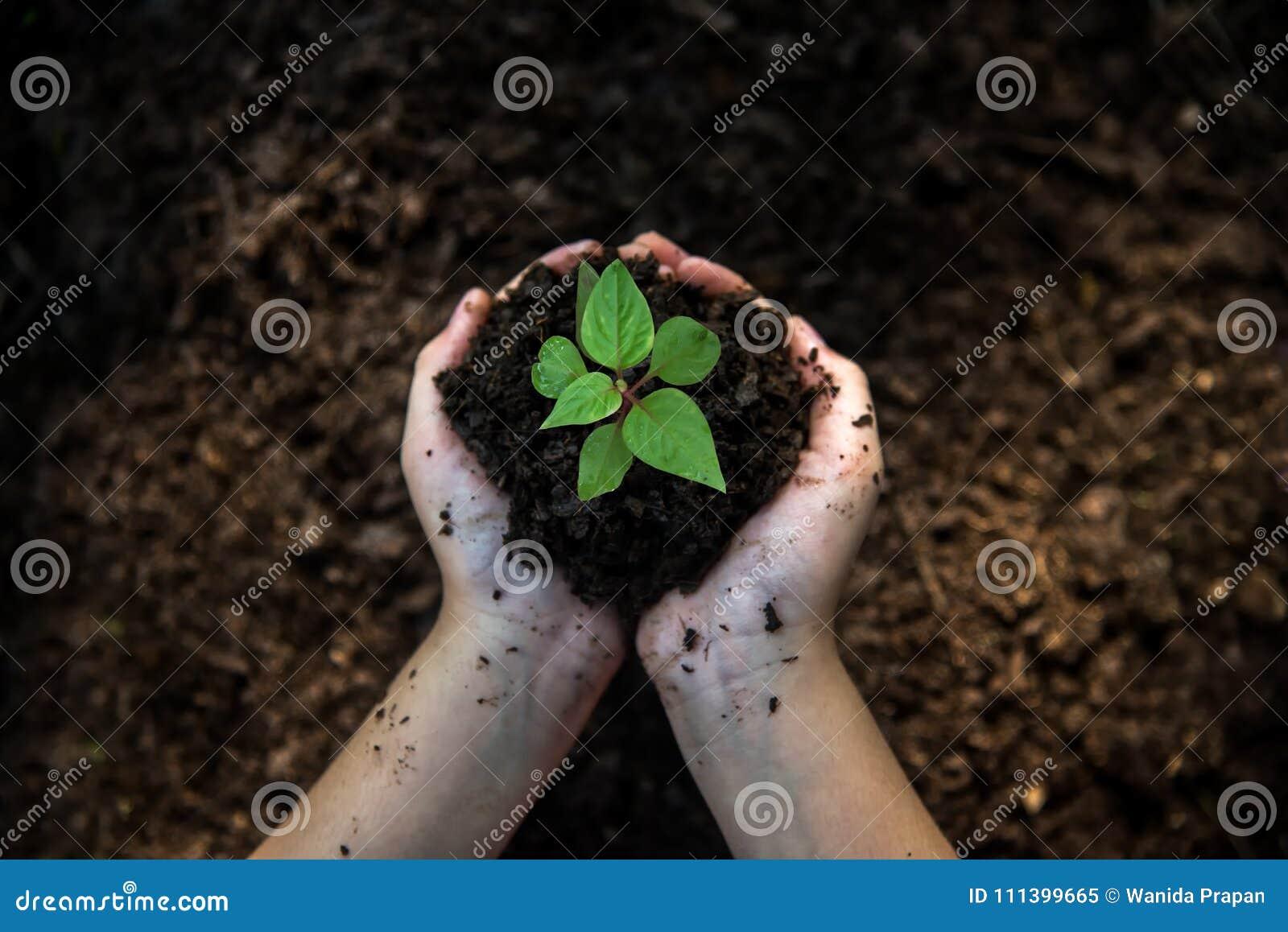 De holdingsjonge planten van het handenkind op de achtergrond in het aardpark van de groei van installatie