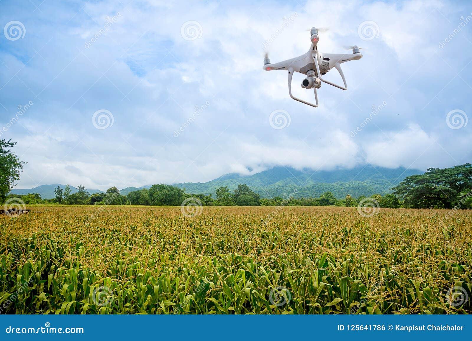 De hommel met professionele camera neemt beelden van het graanlandbouwbedrijf