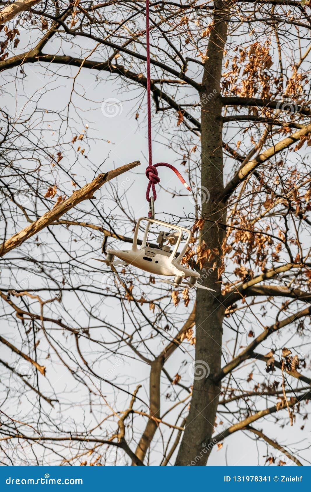 De hommel wordt verminderd op een kabel na wordt gered van treetop