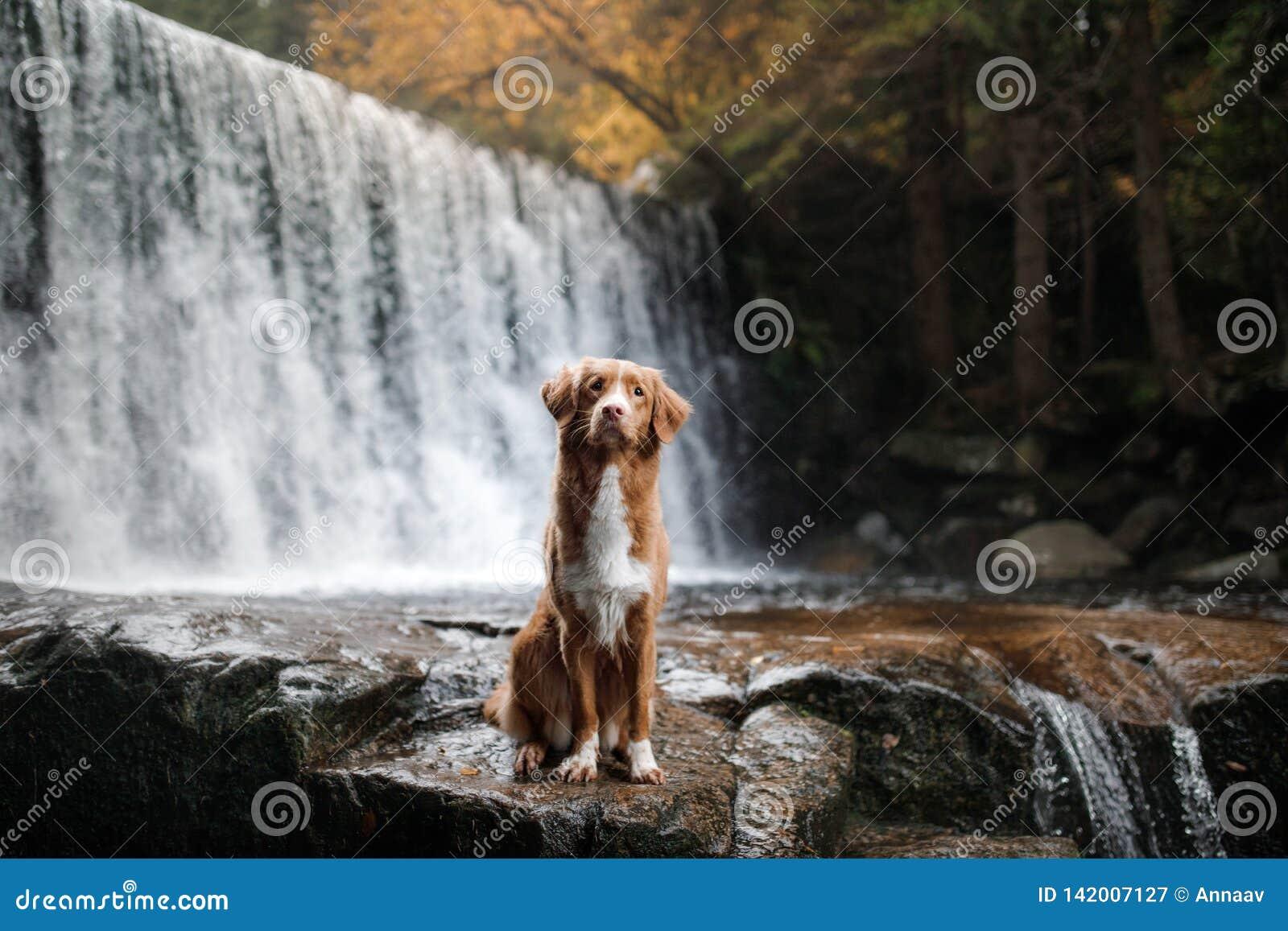 De hond bij de waterval Huisdier op aard buiten het huis Weinig profiel van de rivierhond
