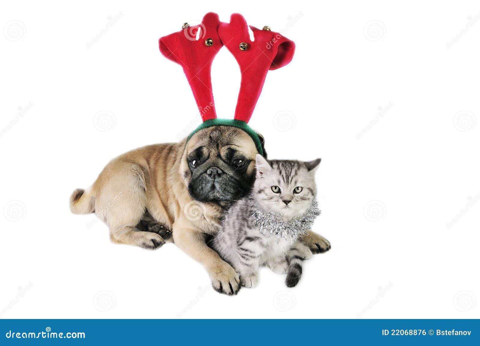 De hond en het katje van Kerstmis