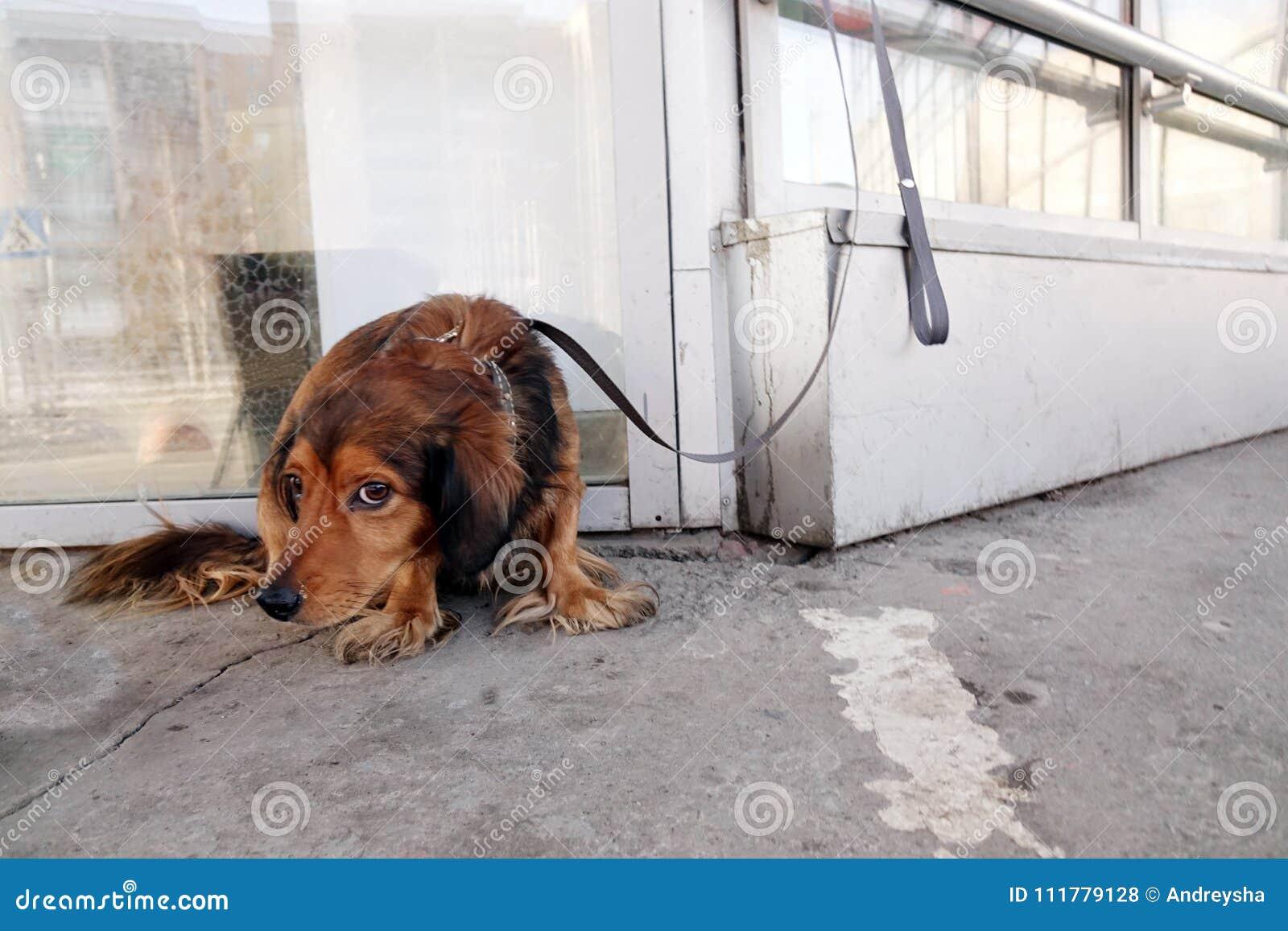 De hond is gebonden met een kraag aan het gebouw op de straat