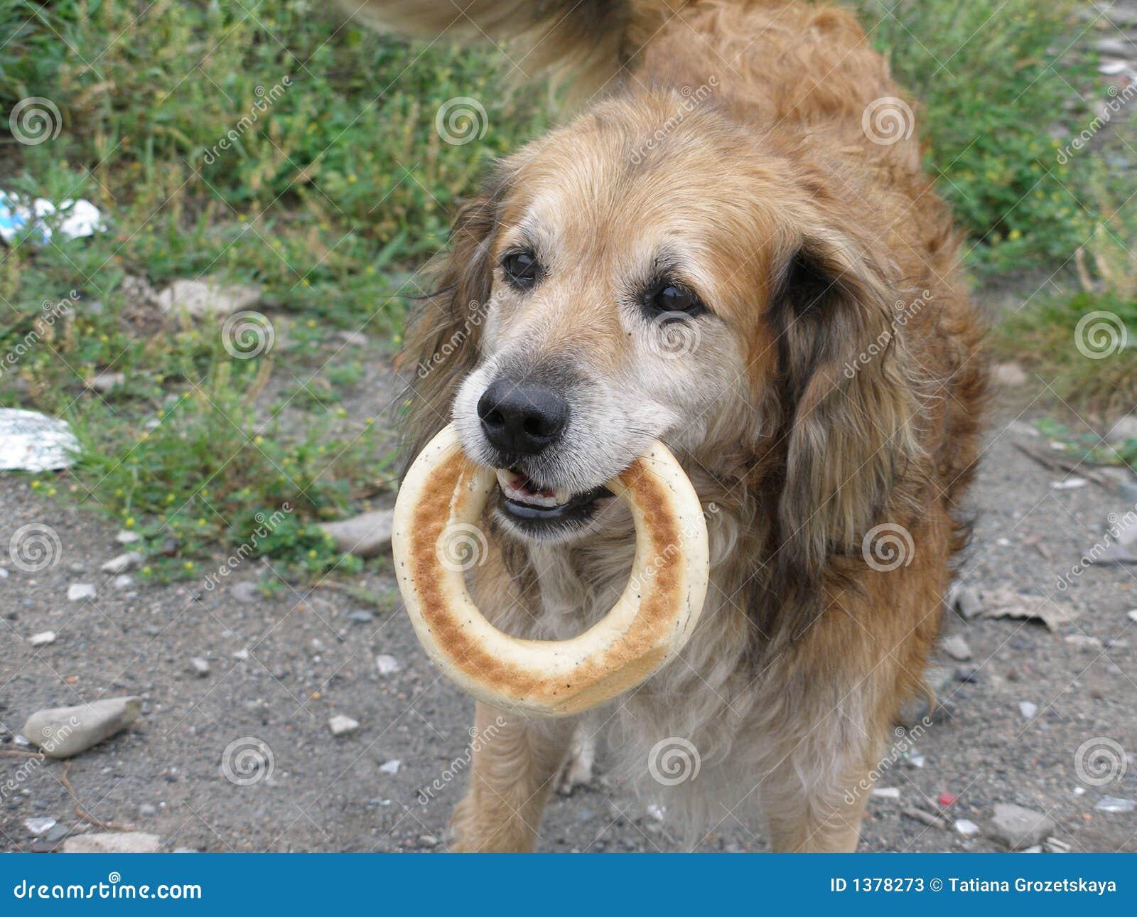 De hond met het ongezuurde broodje