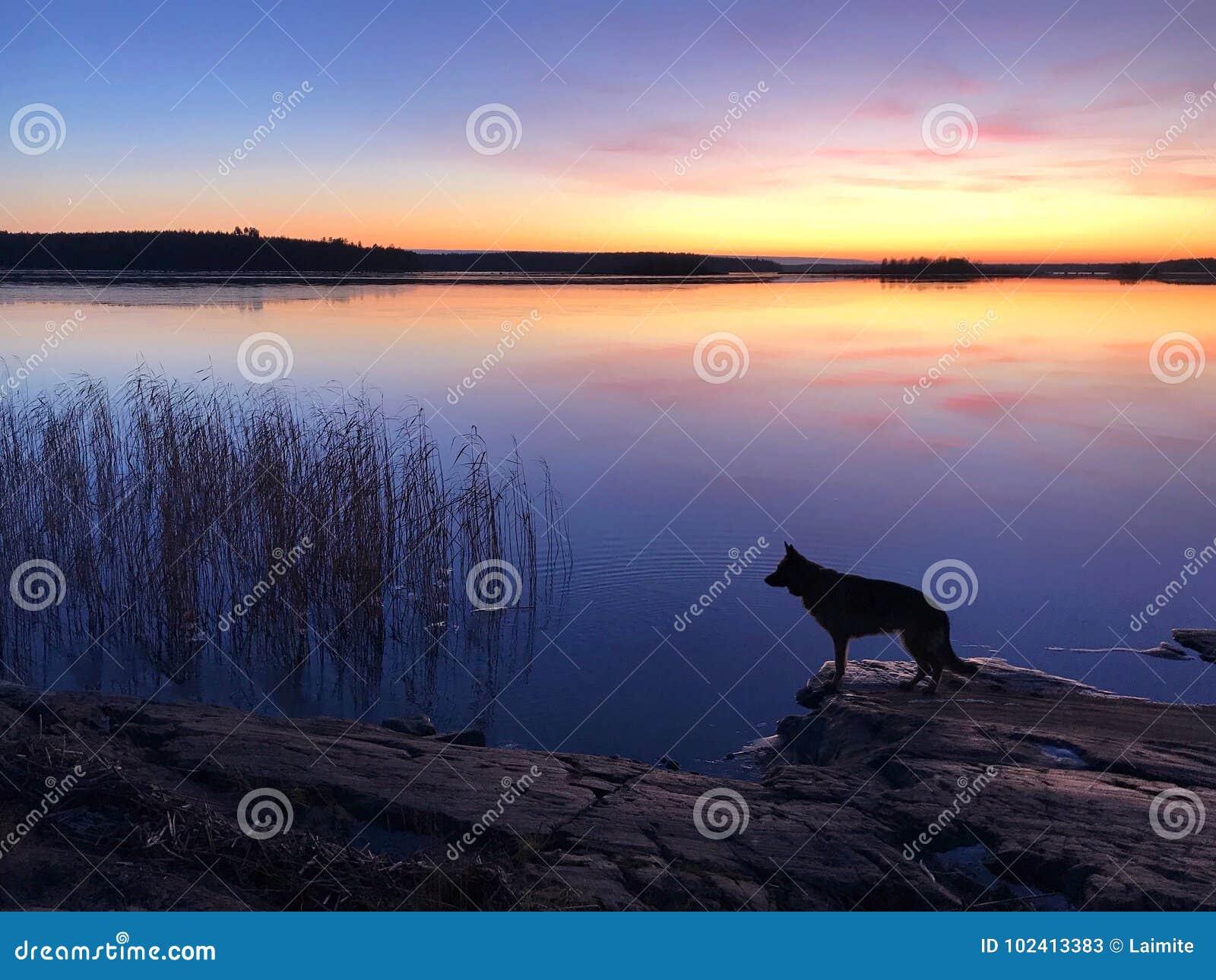 De hond op het strand bij zonsondergang