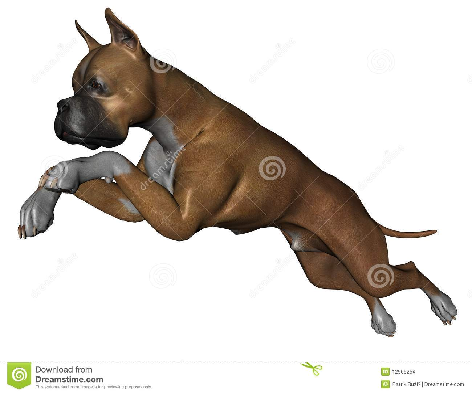 De hond van de bokser