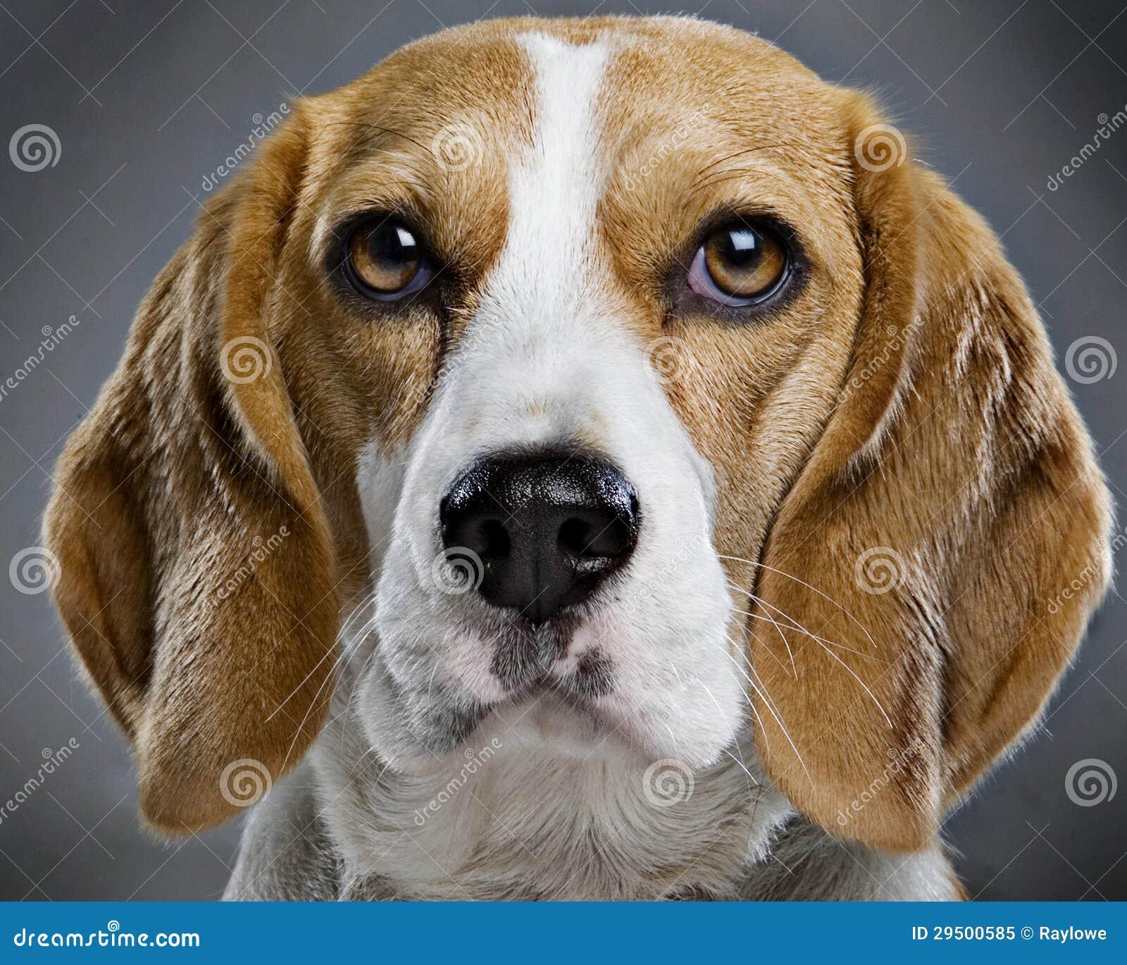 De hond van de brak