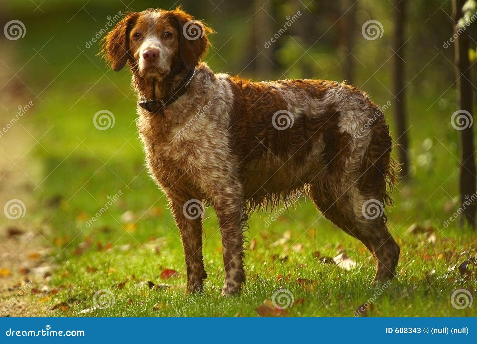 De hond van de jager