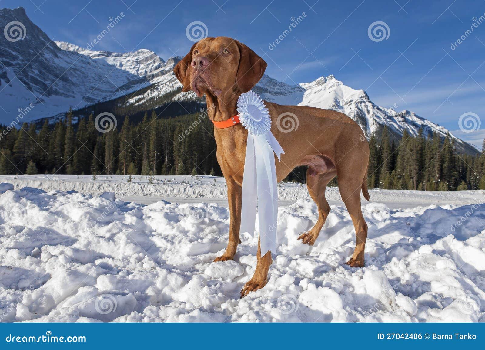 De hond van de kampioen