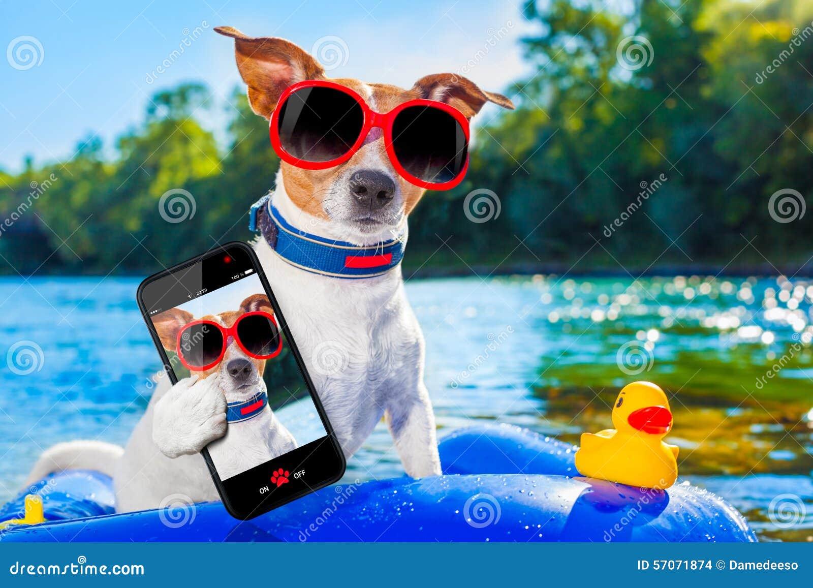 De hond van de strandzomer selfie