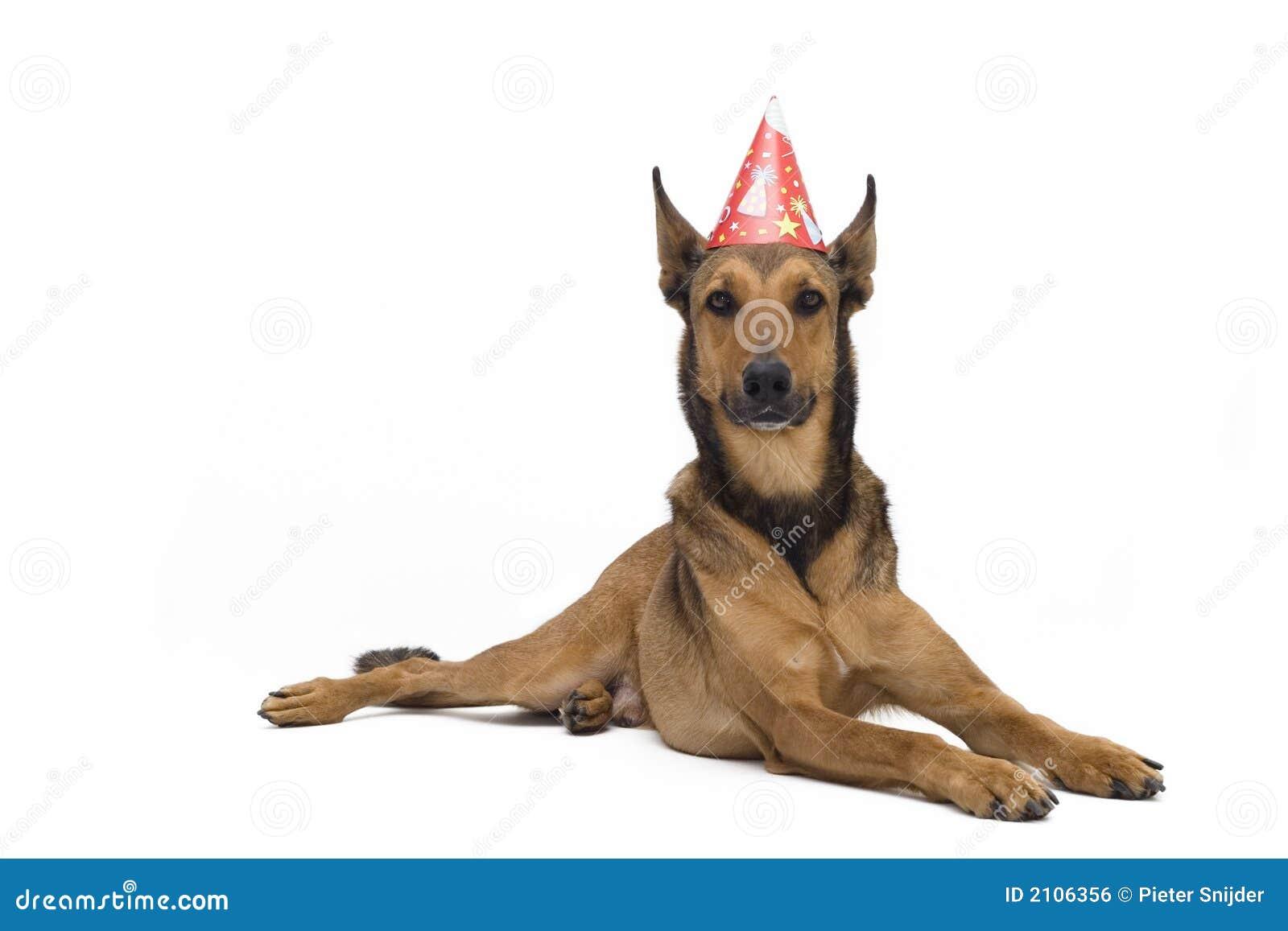 De Hond Van De Verjaardag Stock Foto Afbeelding Bestaande Uit Honds