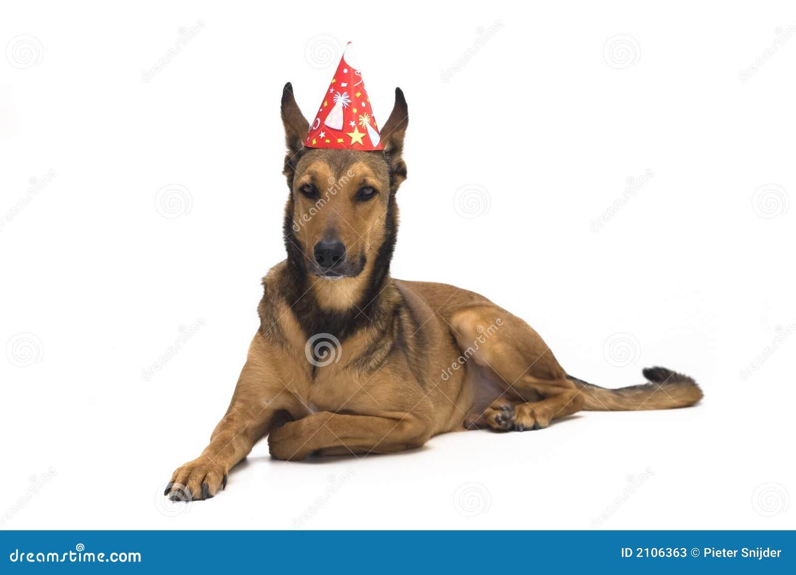 De Hond Van De Verjaardag Stock Afbeelding Afbeelding Bestaande Uit