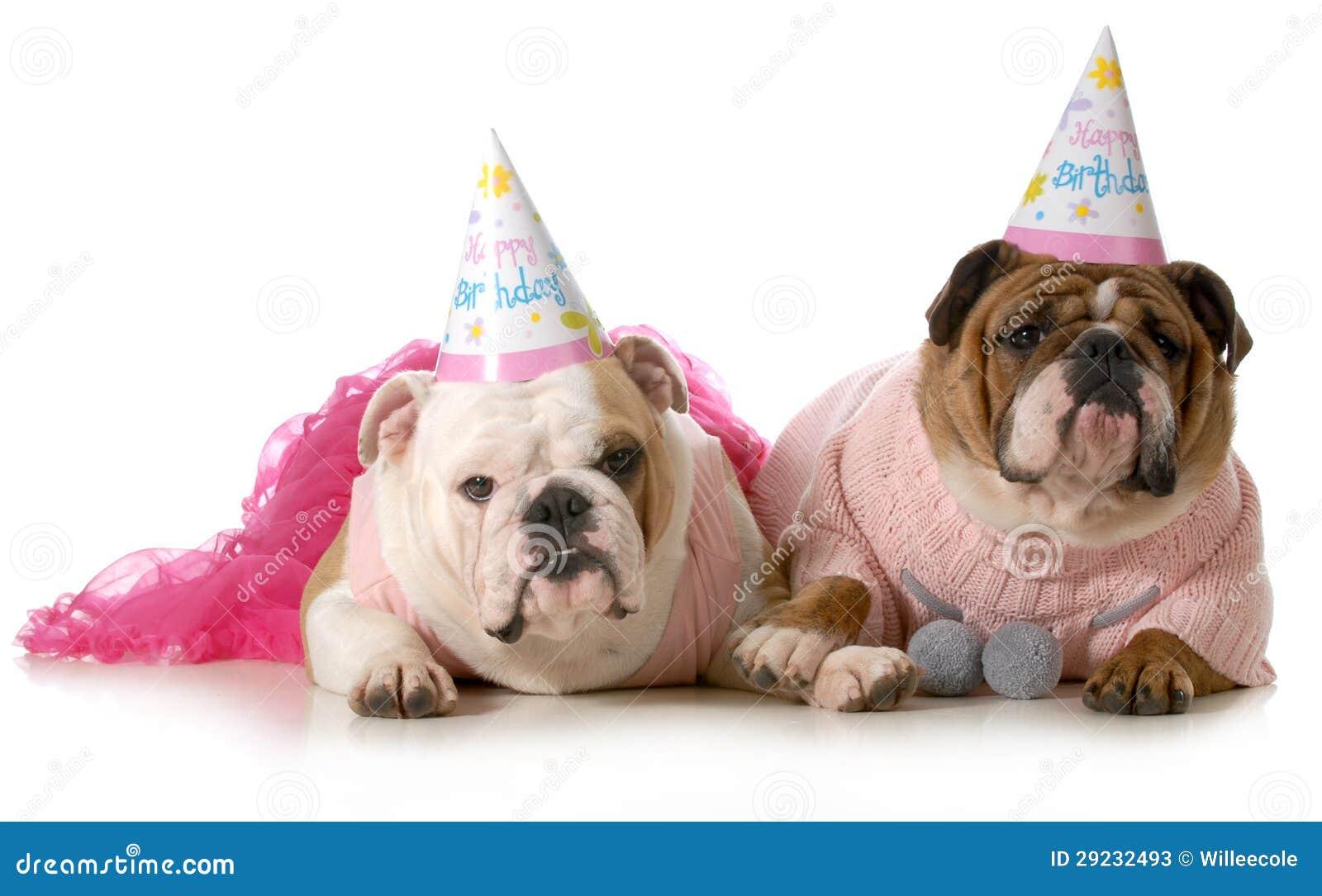 De Verjaardag Van De Hond Voorraadbeelden Download 2 779 Royalty