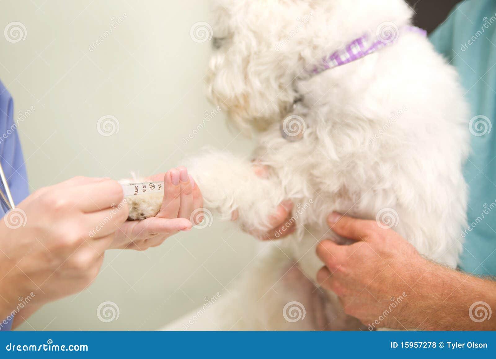 De Hond van het Bloedonderzoek