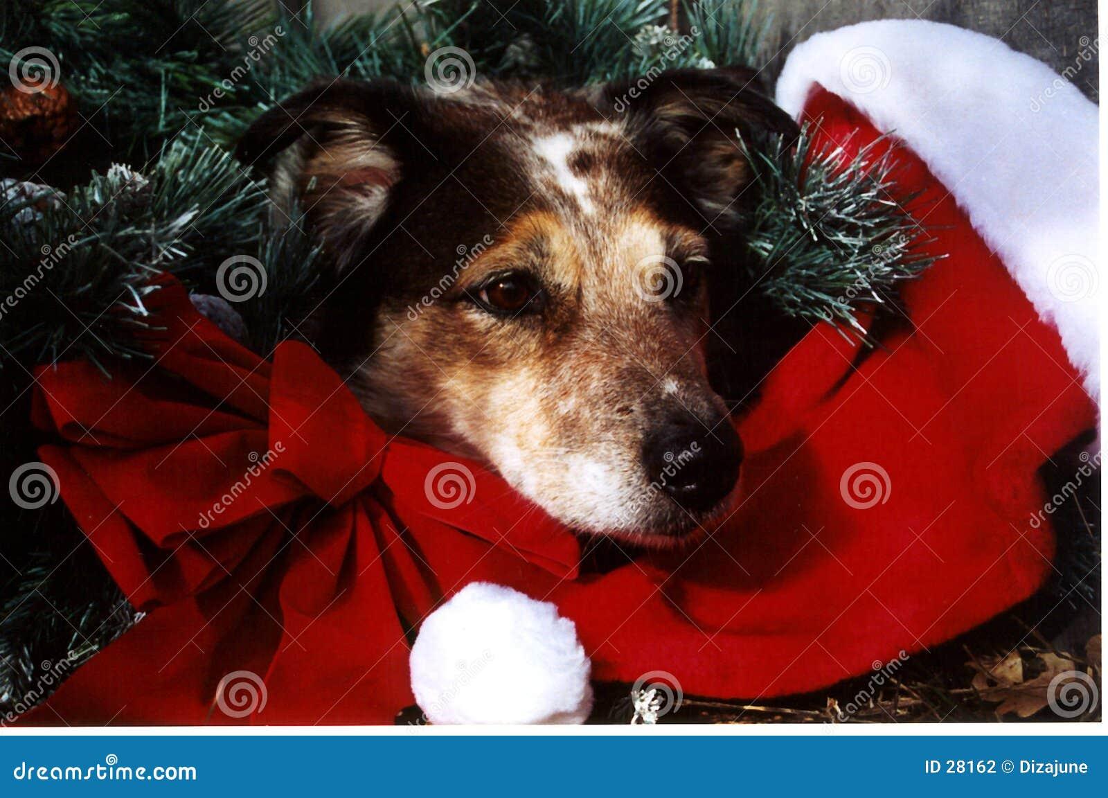 De Hond van Kerstmis