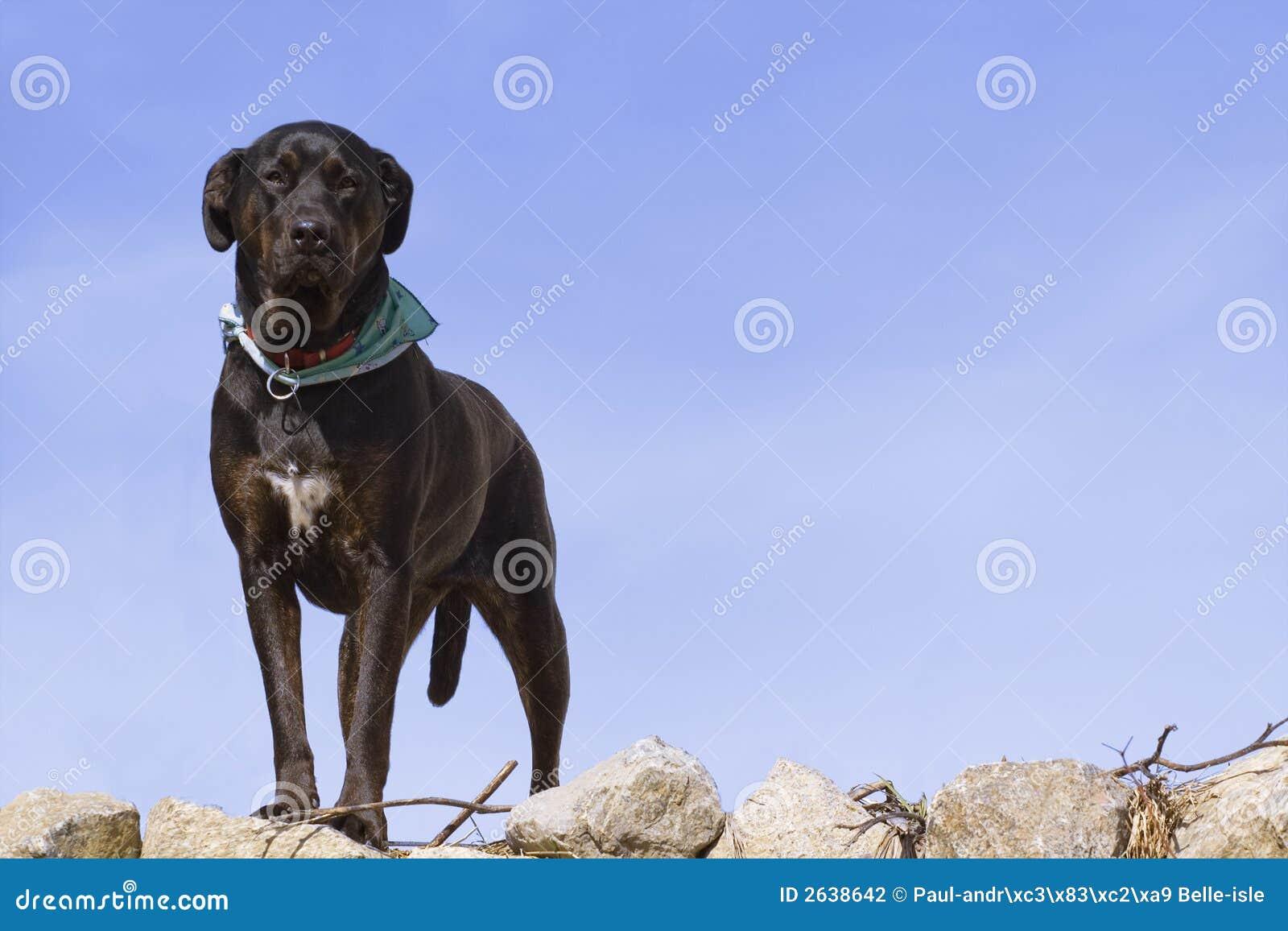 De hond van Nice