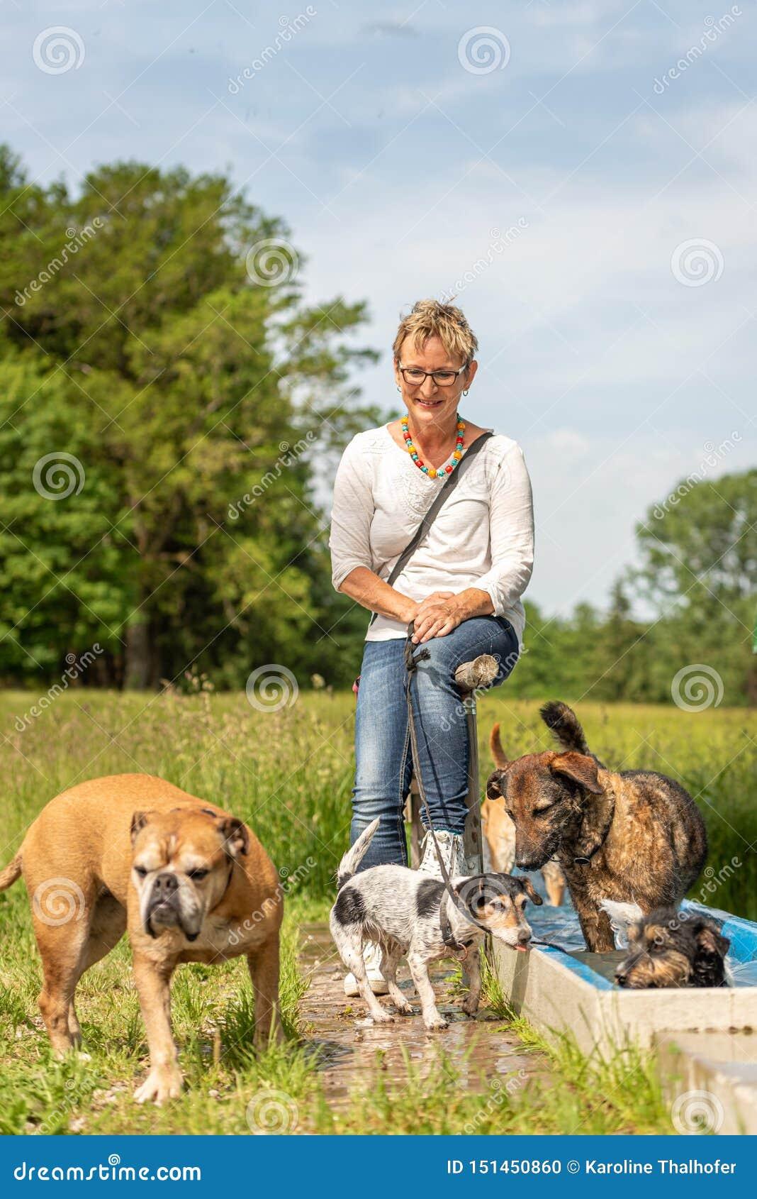 De hondbabysitter rust met vele honden door het water Hondleurder met verschillende hondrassen in de mooie aard